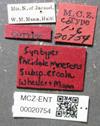 Media of type image, MCZ:Ent:20754 Identified as Pheidole moerens type status Syntype of Pheidole moerens creola| Voucher of Pheidole moerens.