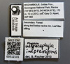 Media of type image, MCZ:Ent:512101 Identified as Pheidole impressifrons.