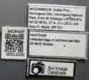 Media of type image, MCZ:Ent:512200 Identified as Pheidole sp..