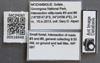Media of type image, MCZ:Ent:516948 Identified as Pheidole sp..
