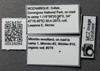 http://mczbase.mcz.harvard.edu/specimen_images/ent-formicidae/automontage/large/MCZ-ENT00524094_Carebara_sp8_lbs.jpg