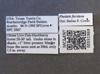 Media of type image, MCZ:Ent:551969 Identified as Pheidole floridana. . Aspect: labels
