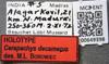 http://mczbase.mcz.harvard.edu/specimen_images/ent-formicidae/automontage/large/MCZ-ENT00649398_Cerapachys_decamerus_lbs.jpg