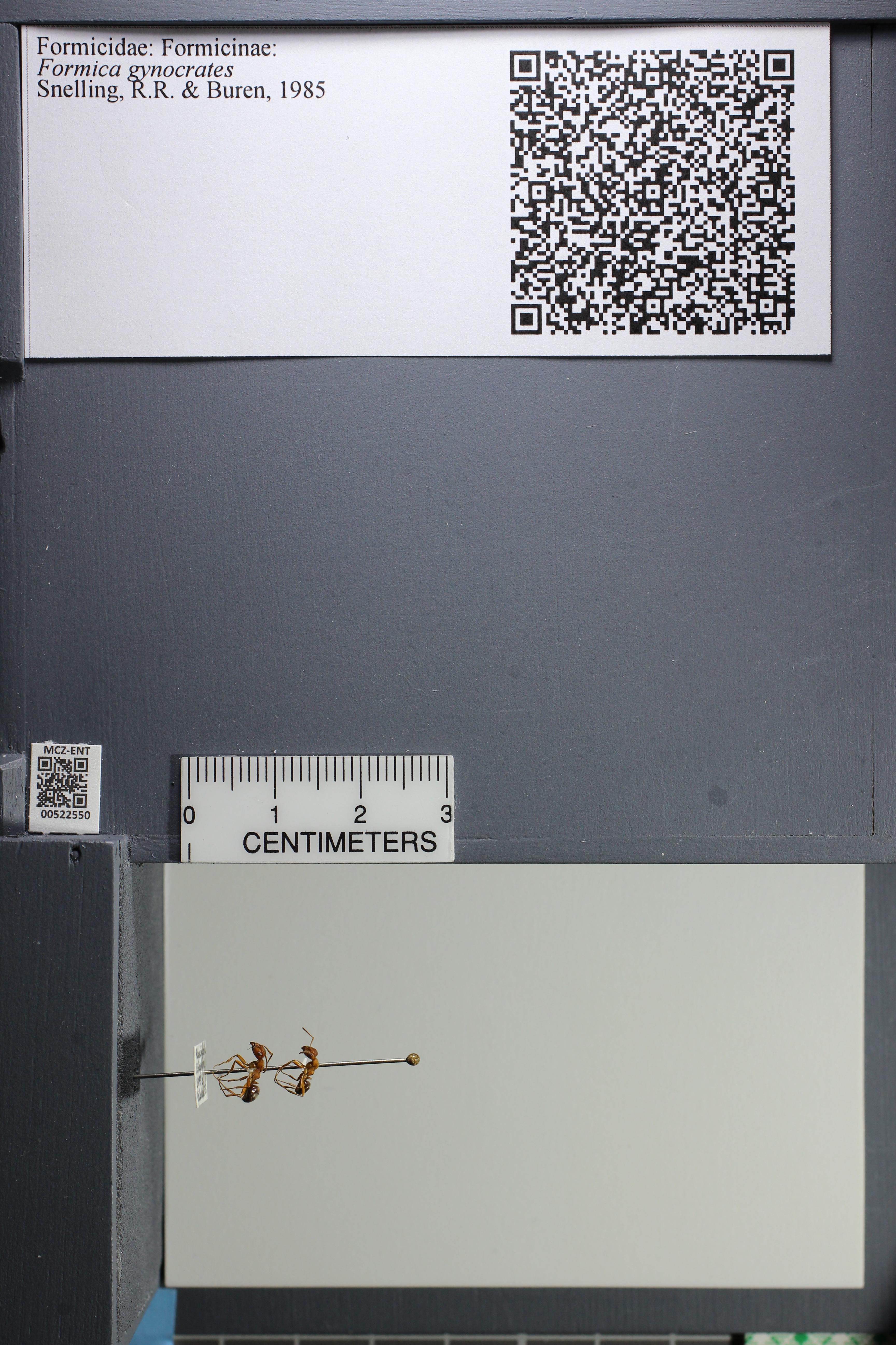 http://mczbase.mcz.harvard.edu/specimen_images/ent-formicidae/datashot/2014_02_12/IMG_300124.JPG