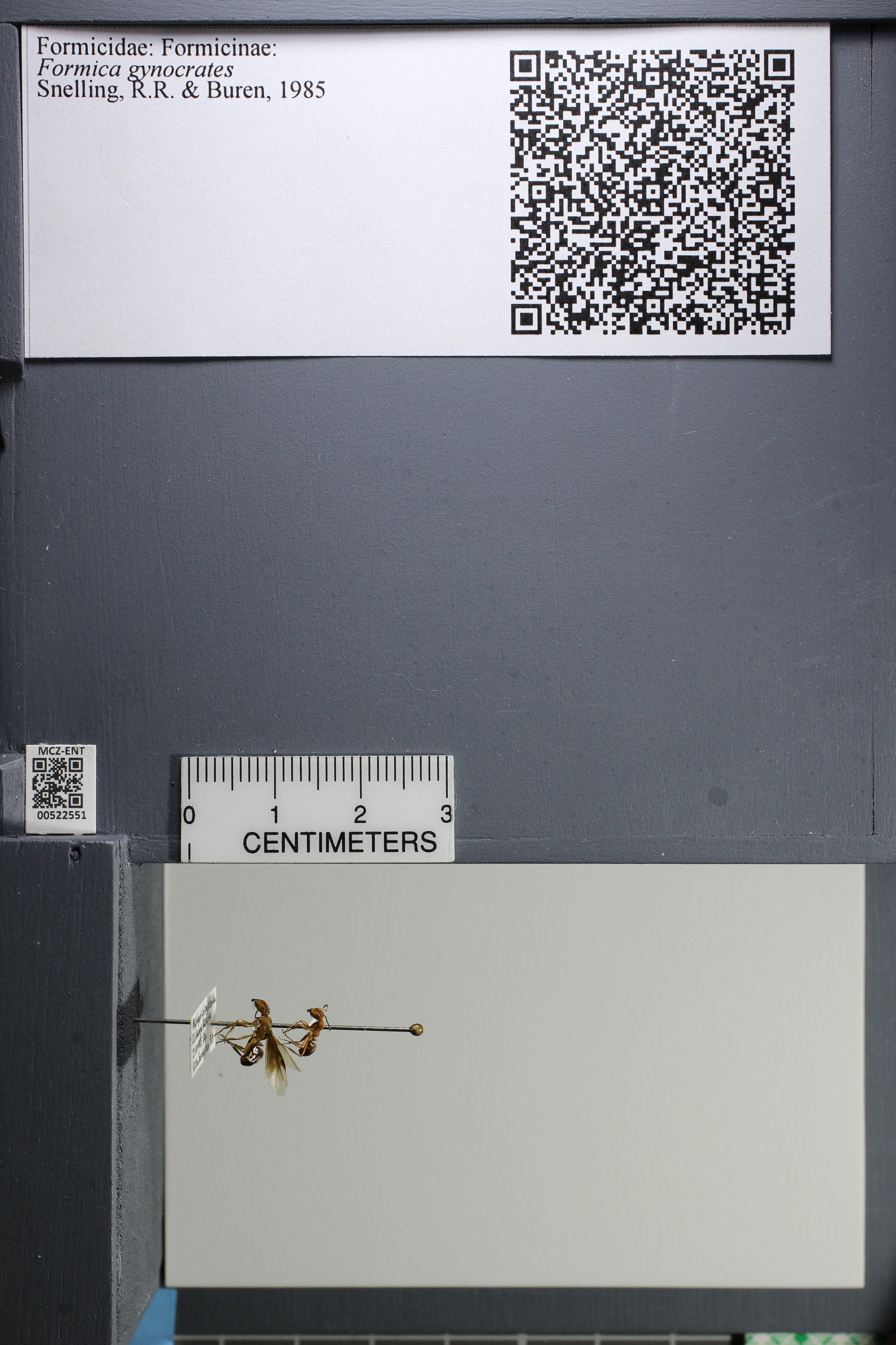 http://mczbase.mcz.harvard.edu/specimen_images/ent-formicidae/datashot/2014_02_12/IMG_300125.JPG