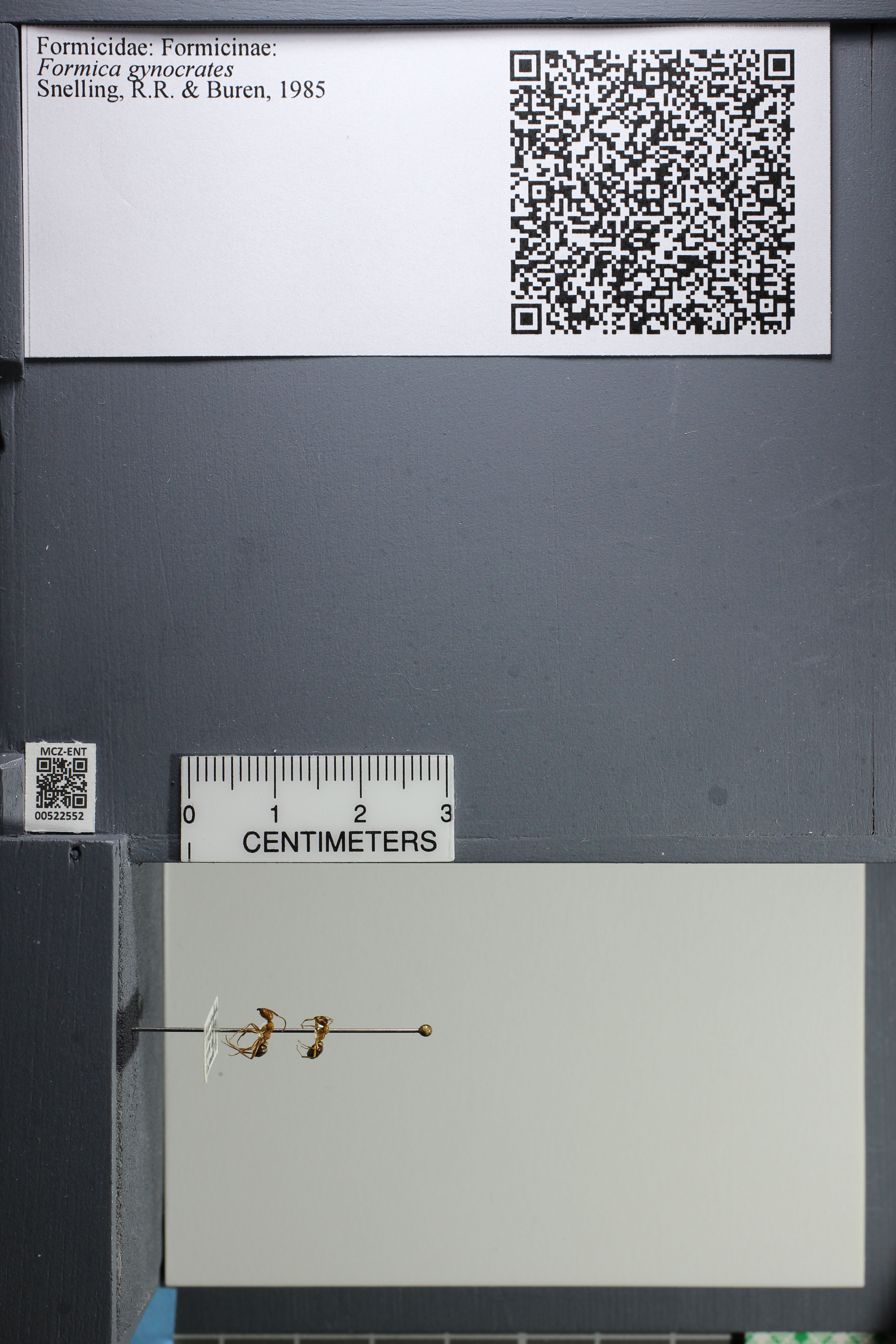 http://mczbase.mcz.harvard.edu/specimen_images/ent-formicidae/datashot/2014_02_12/IMG_300126.JPG
