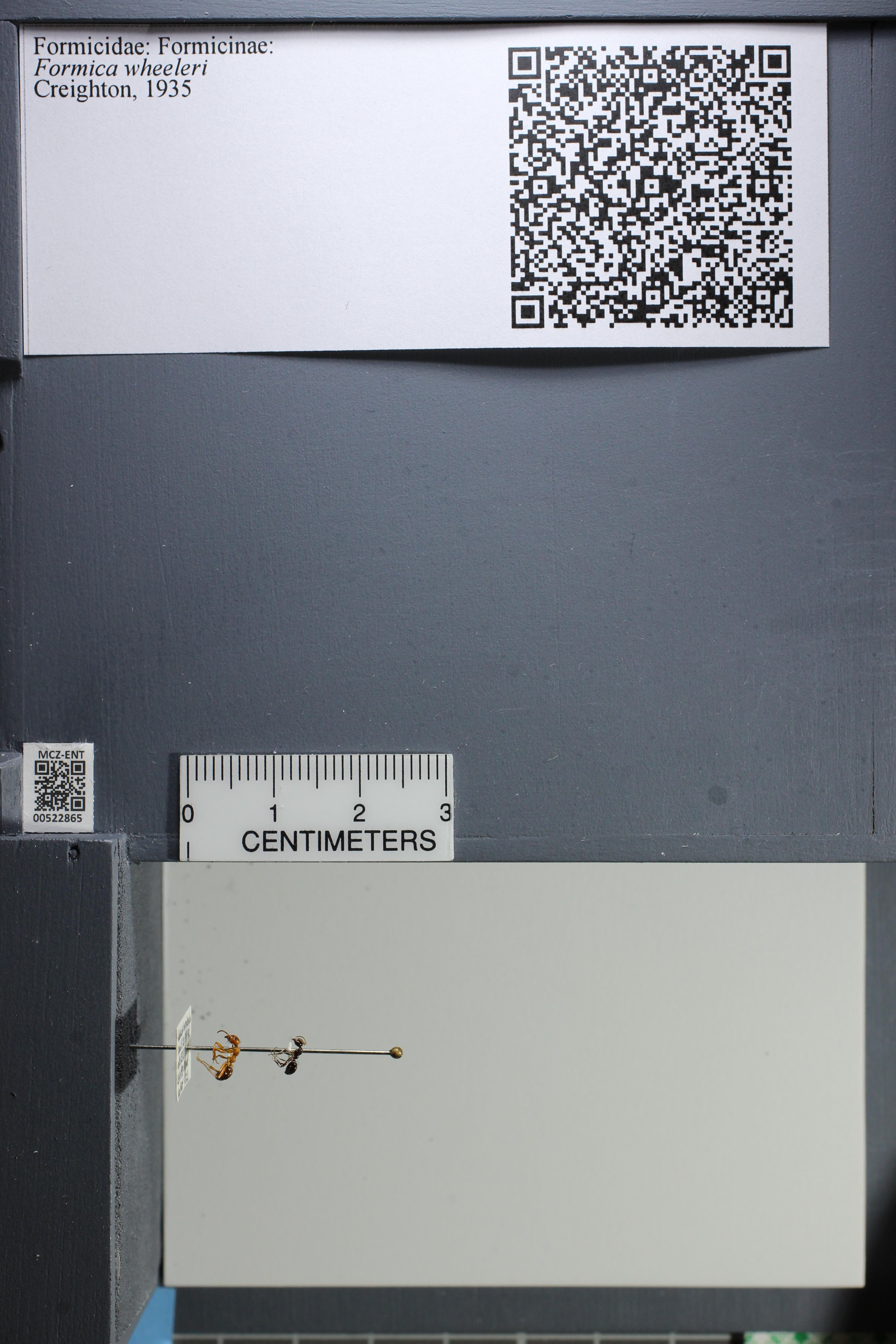 http://mczbase.mcz.harvard.edu/specimen_images/ent-formicidae/datashot/2014_02_18/IMG_300440.JPG