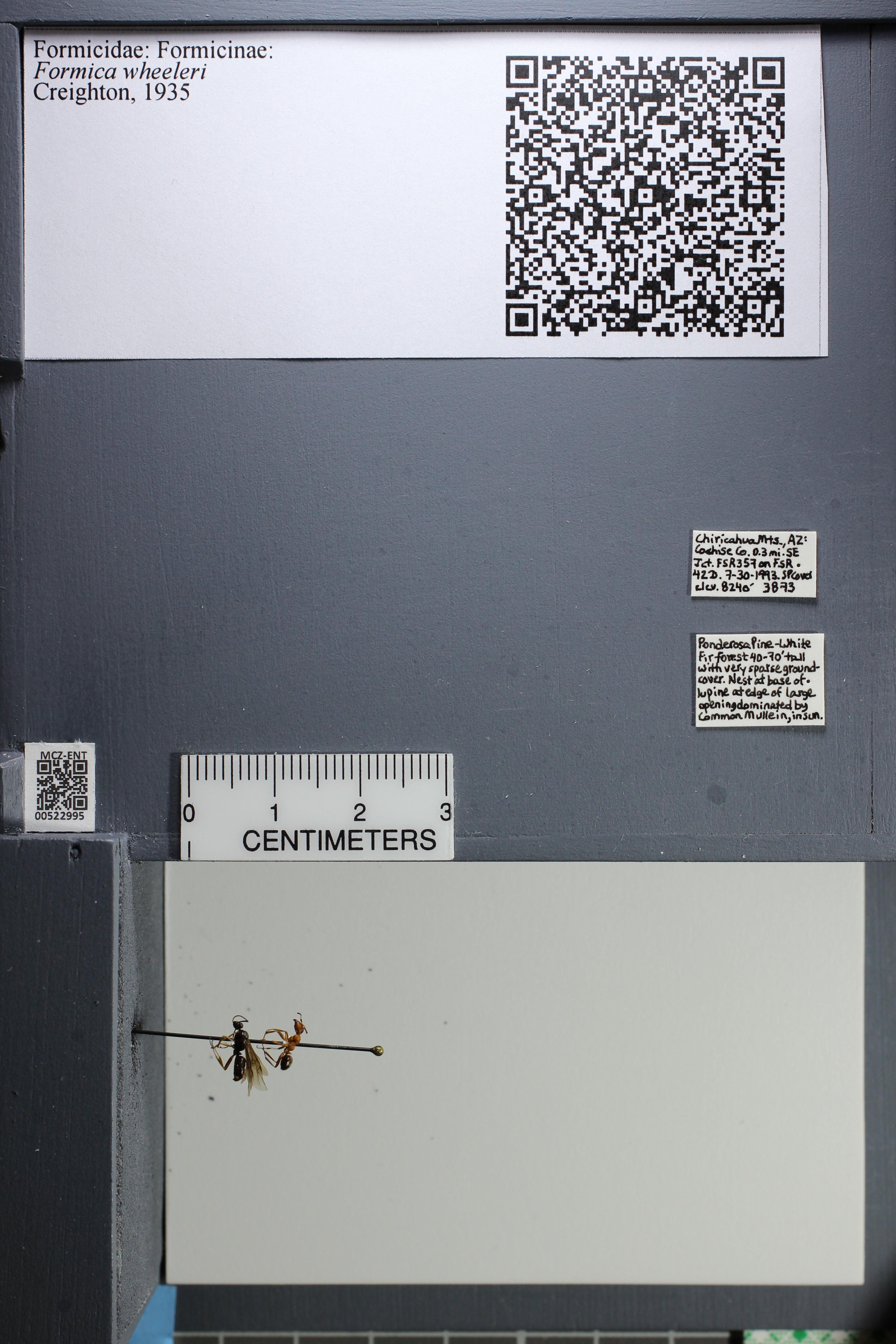 http://mczbase.mcz.harvard.edu/specimen_images/ent-formicidae/datashot/2014_02_19/IMG_300613.JPG
