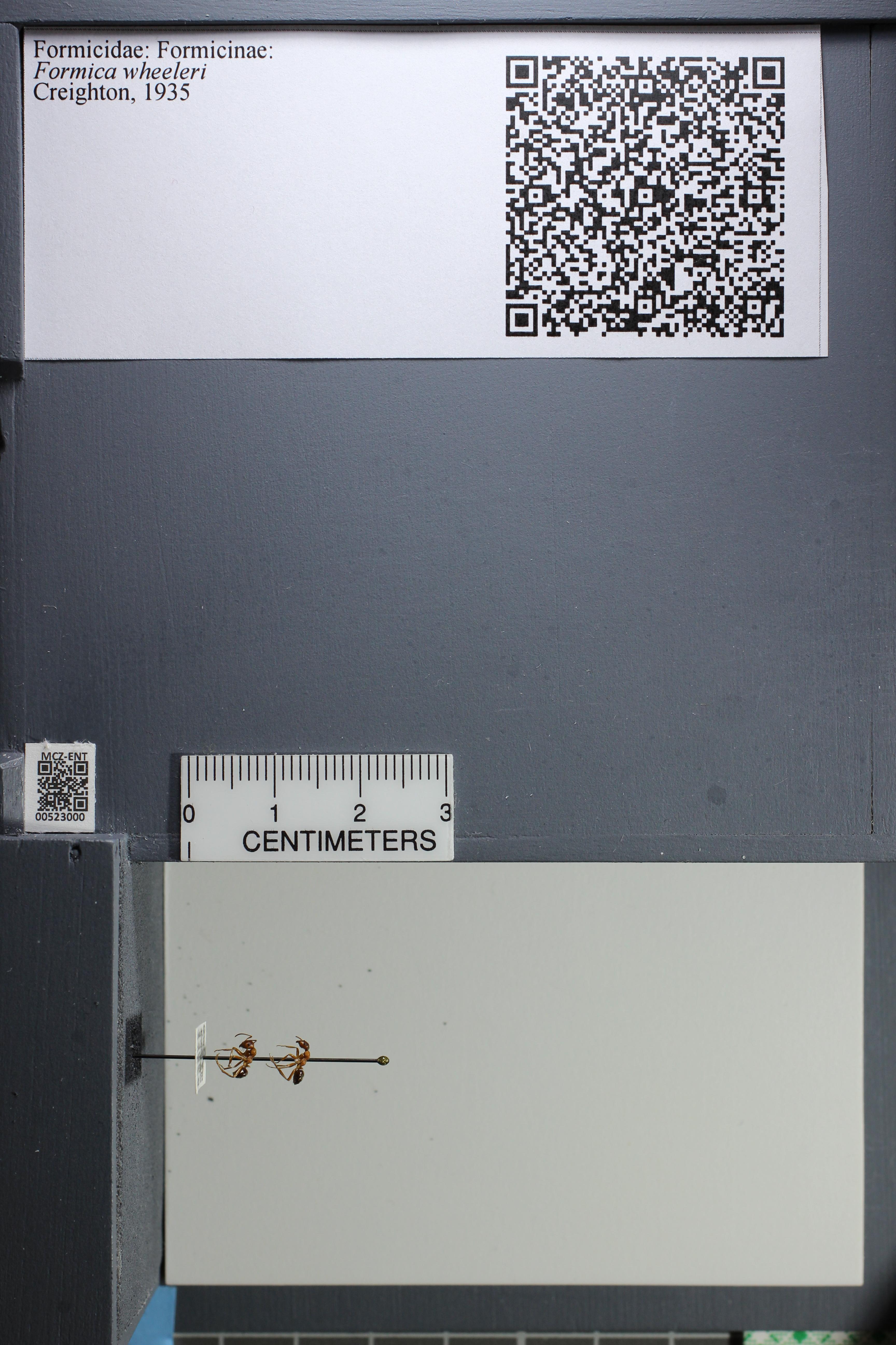 http://mczbase.mcz.harvard.edu/specimen_images/ent-formicidae/datashot/2014_02_19/IMG_300618.JPG