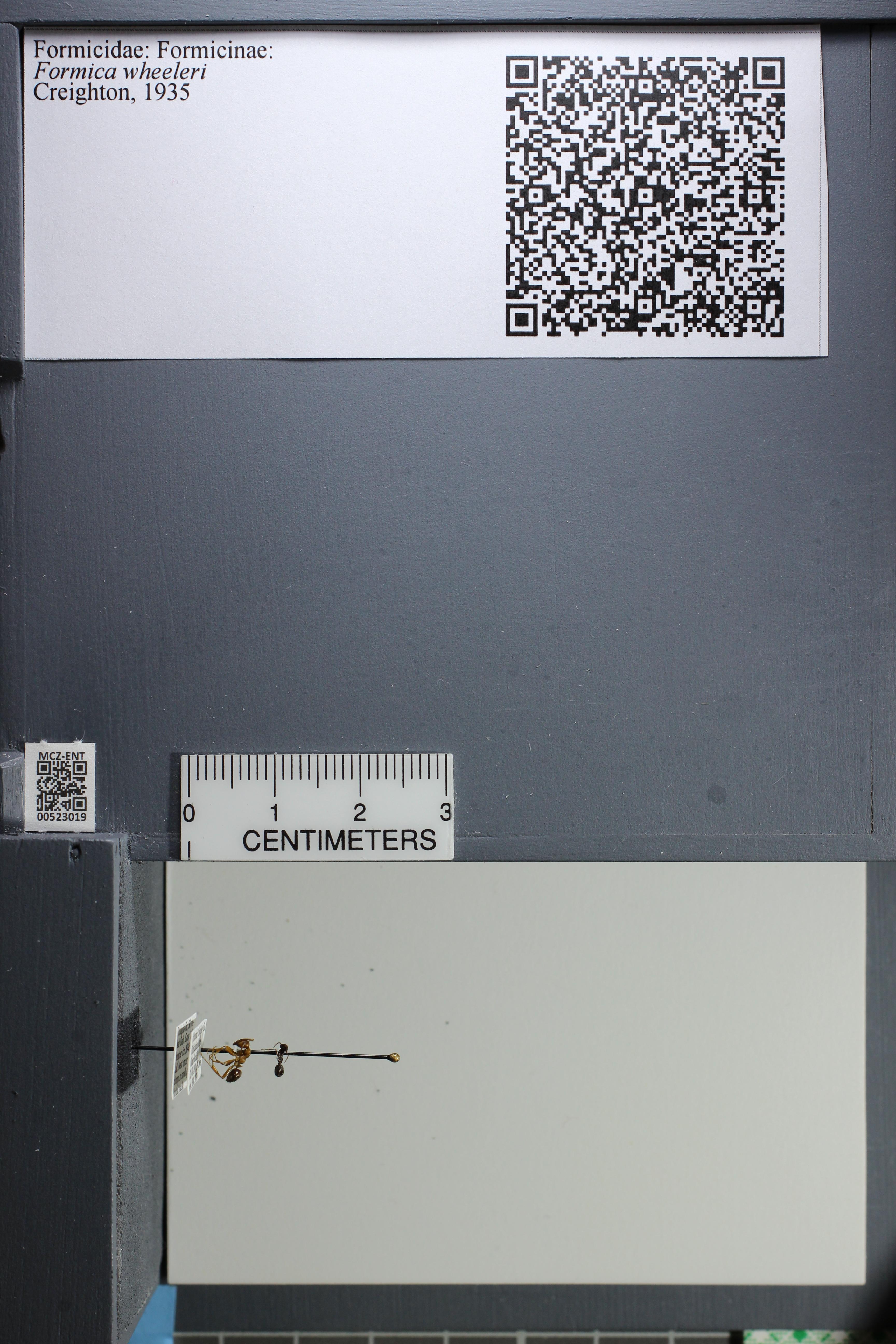 http://mczbase.mcz.harvard.edu/specimen_images/ent-formicidae/datashot/2014_02_19/IMG_300637.JPG
