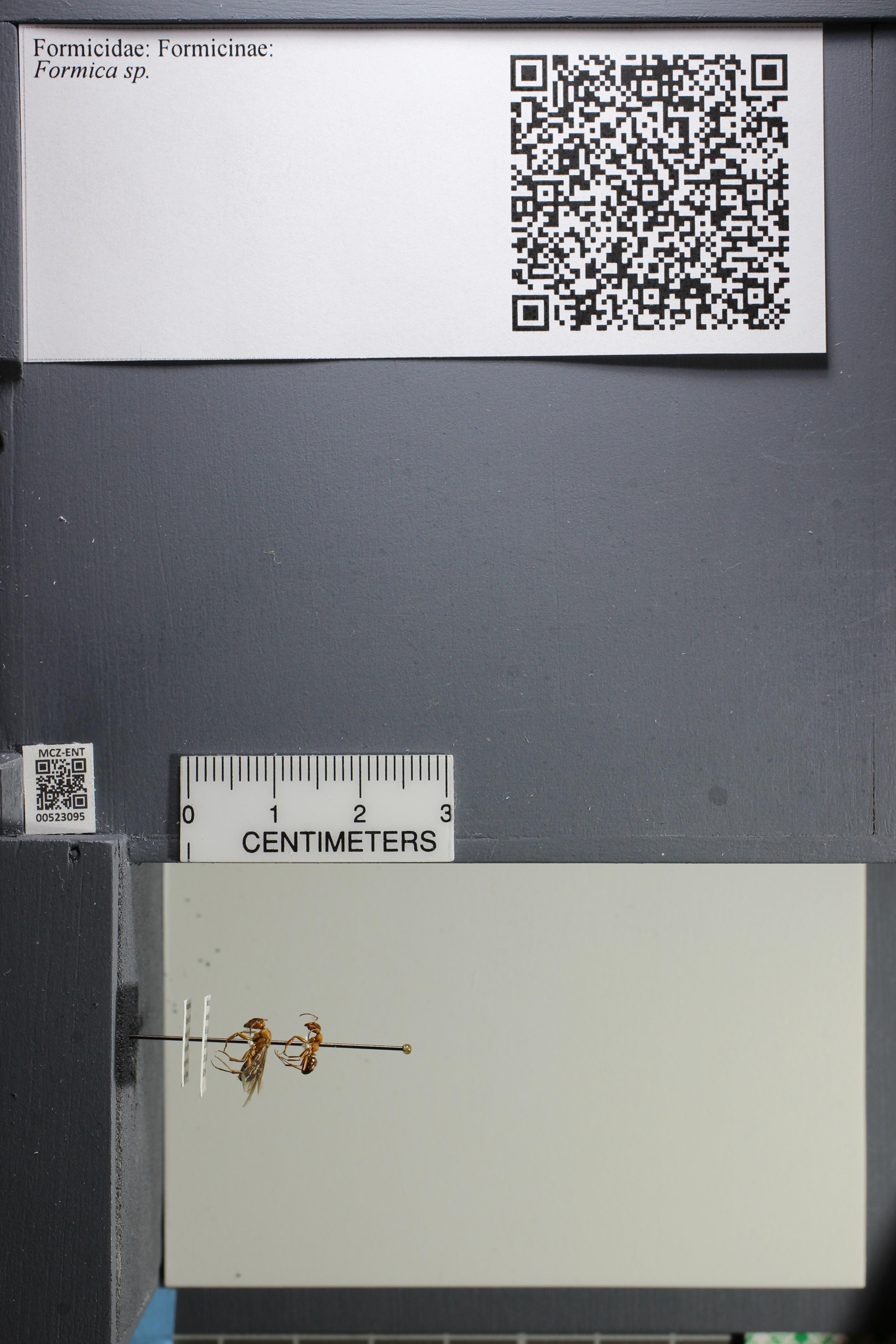 http://mczbase.mcz.harvard.edu/specimen_images/ent-formicidae/datashot/2014_02_25/IMG_300684.JPG