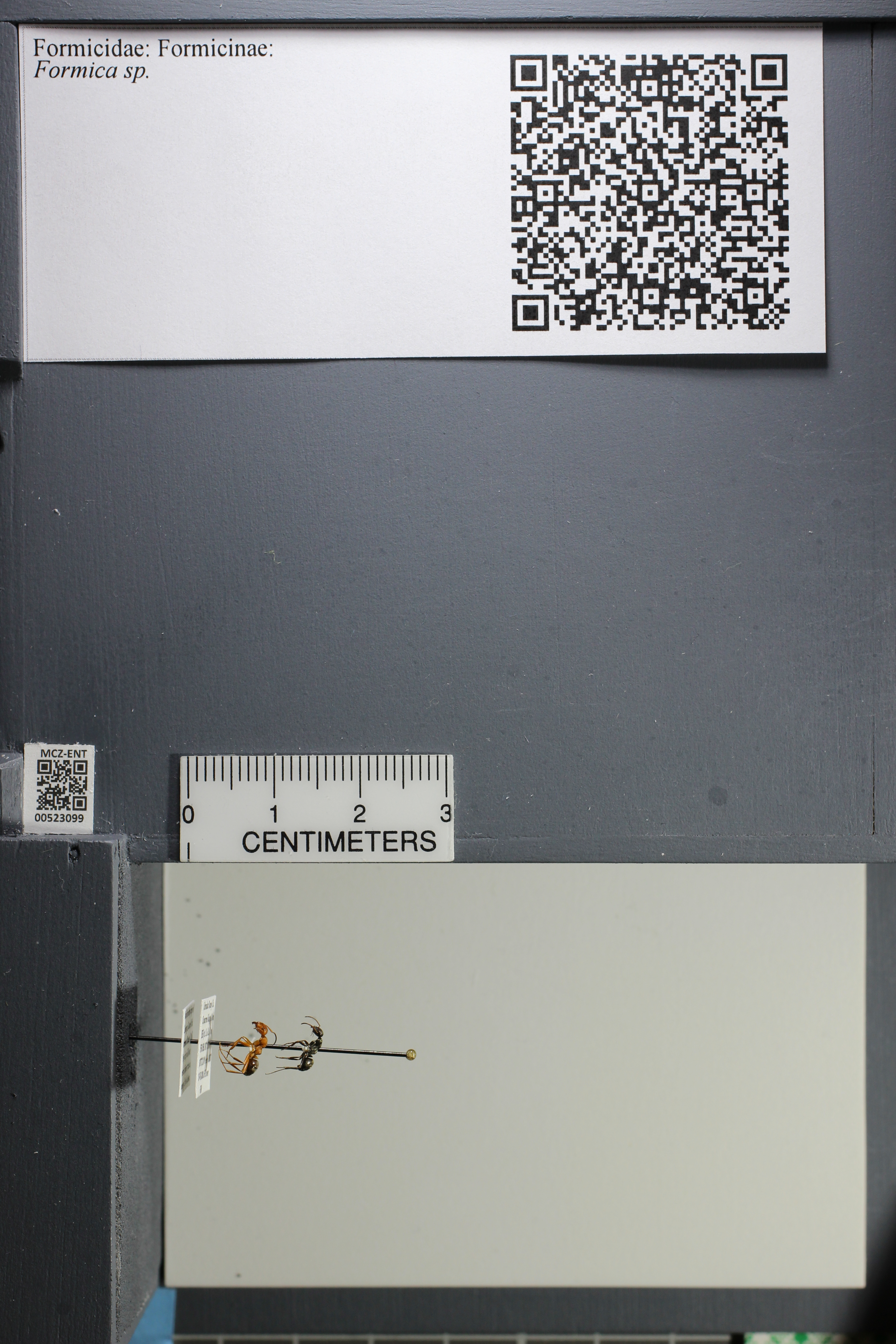 http://mczbase.mcz.harvard.edu/specimen_images/ent-formicidae/datashot/2014_02_25/IMG_300689.JPG