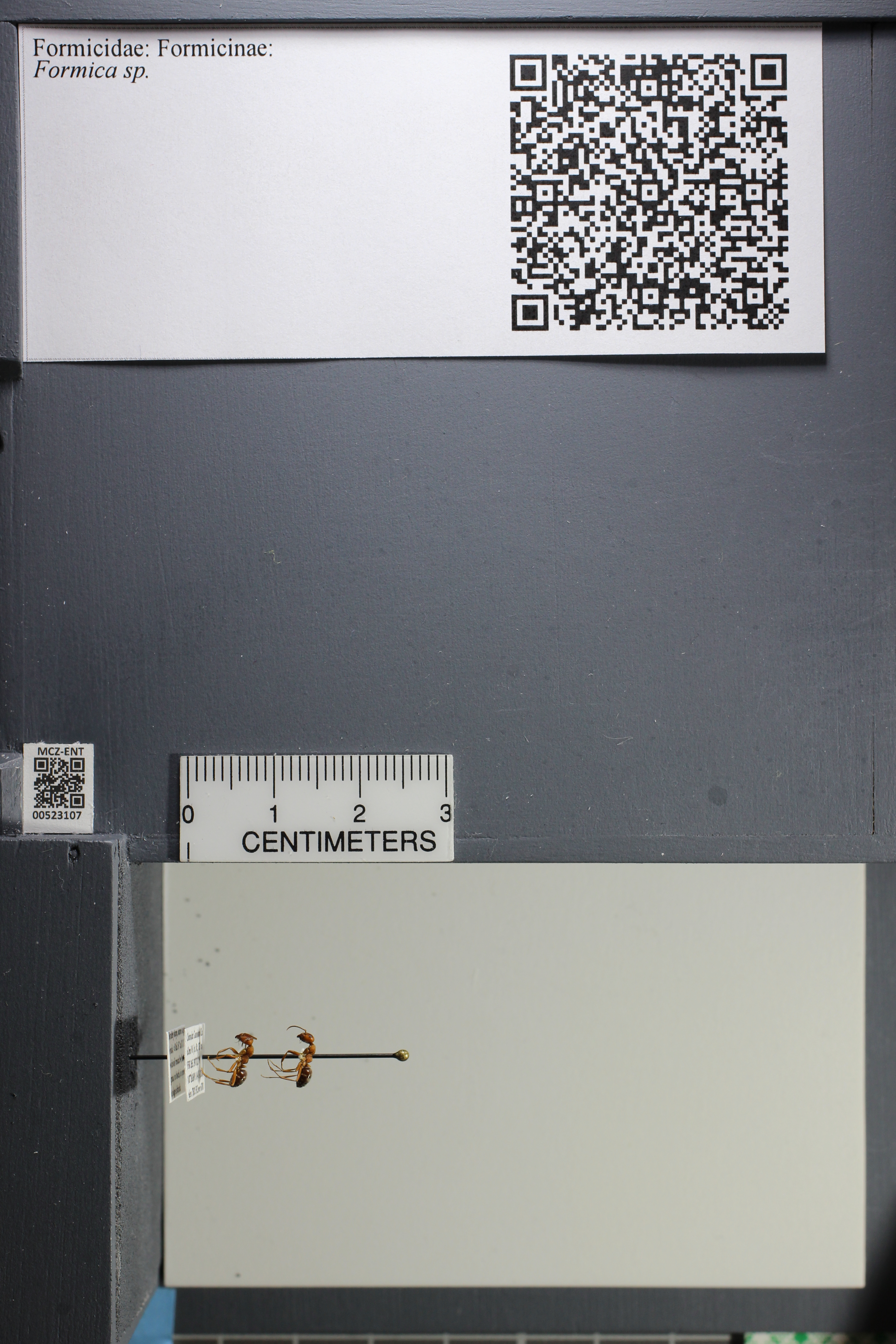 http://mczbase.mcz.harvard.edu/specimen_images/ent-formicidae/datashot/2014_02_25/IMG_300697.JPG