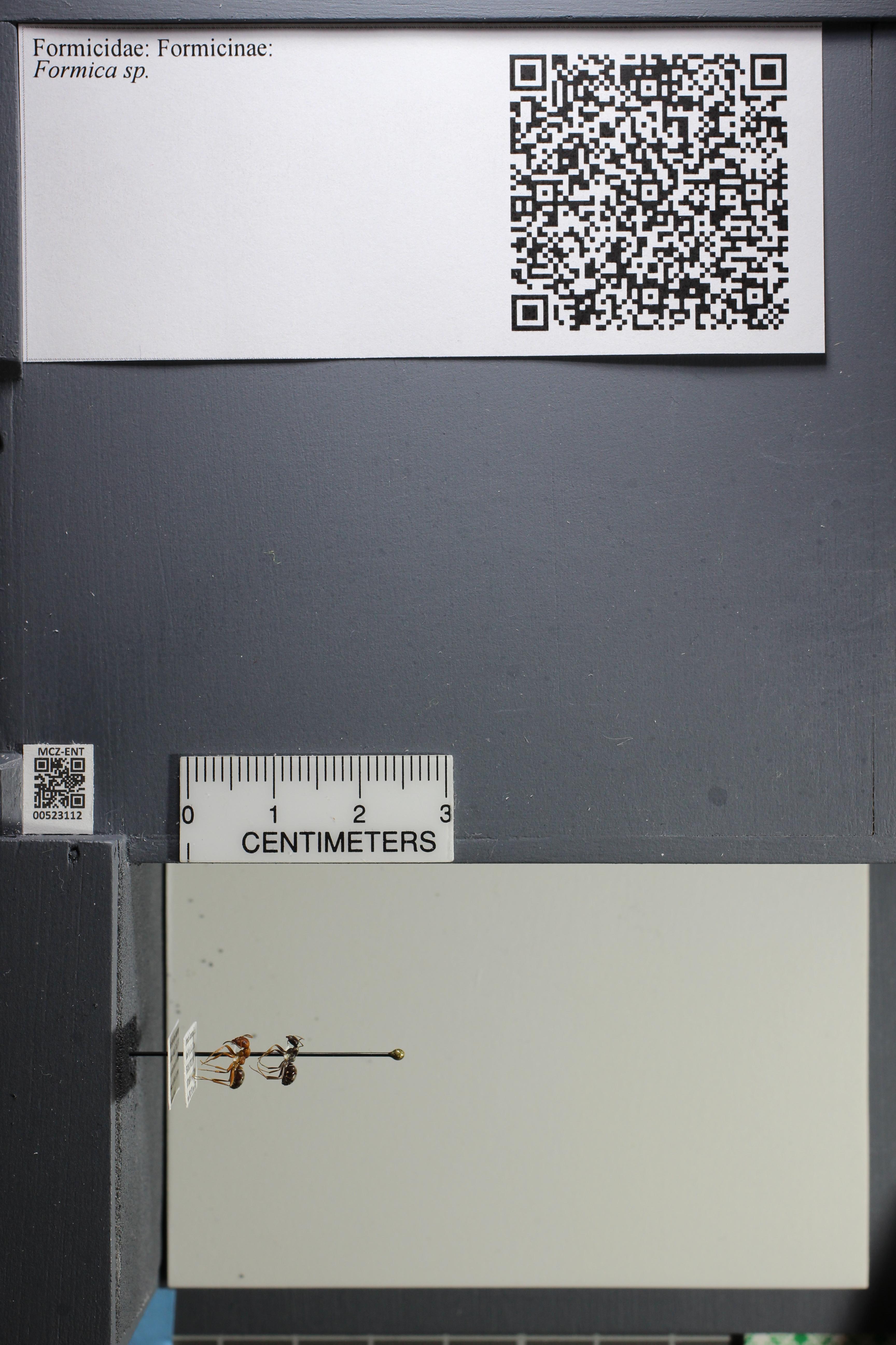 http://mczbase.mcz.harvard.edu/specimen_images/ent-formicidae/datashot/2014_02_25/IMG_300702.JPG