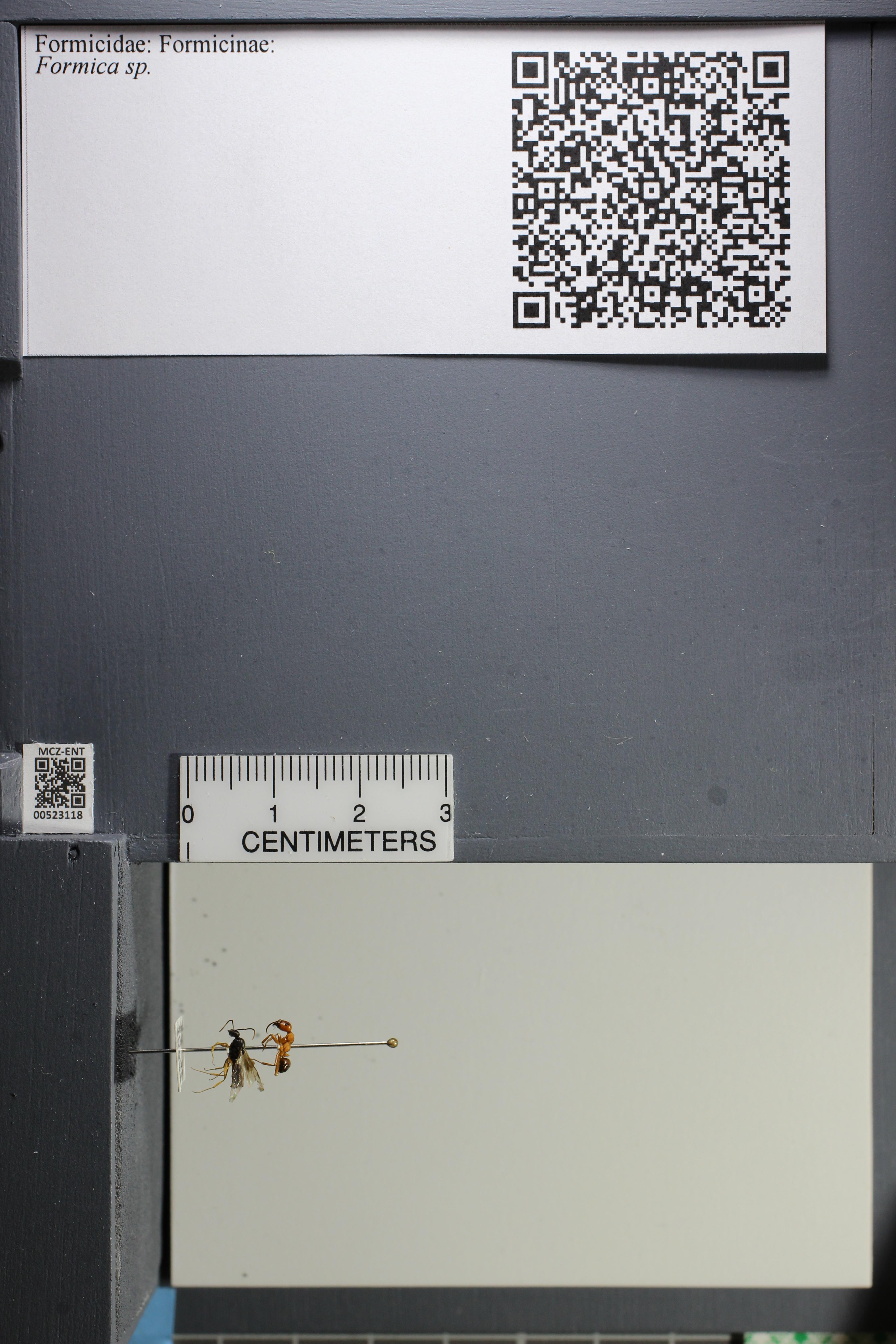 http://mczbase.mcz.harvard.edu/specimen_images/ent-formicidae/datashot/2014_02_25/IMG_300708.JPG