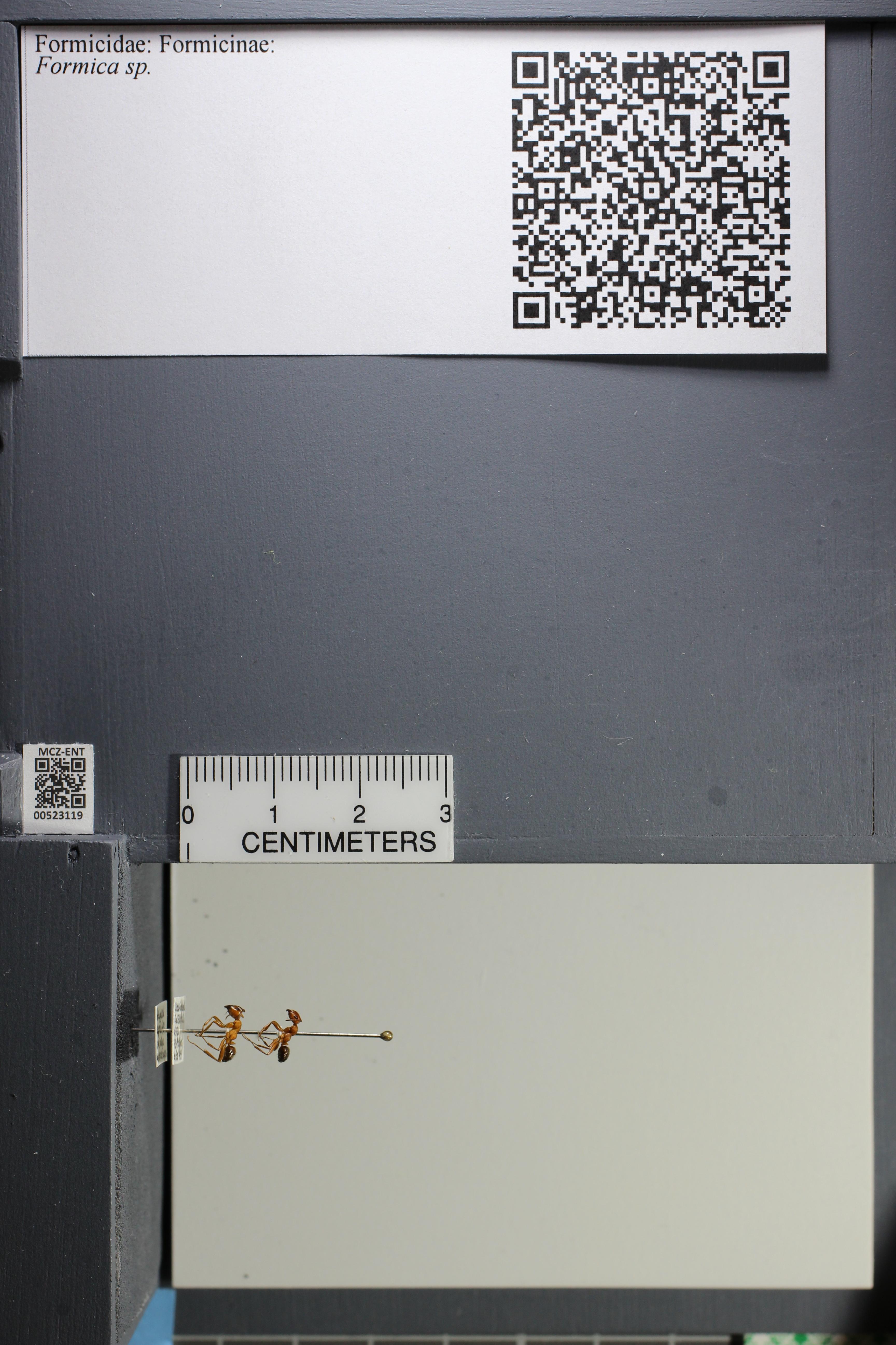 http://mczbase.mcz.harvard.edu/specimen_images/ent-formicidae/datashot/2014_02_25/IMG_300709.JPG