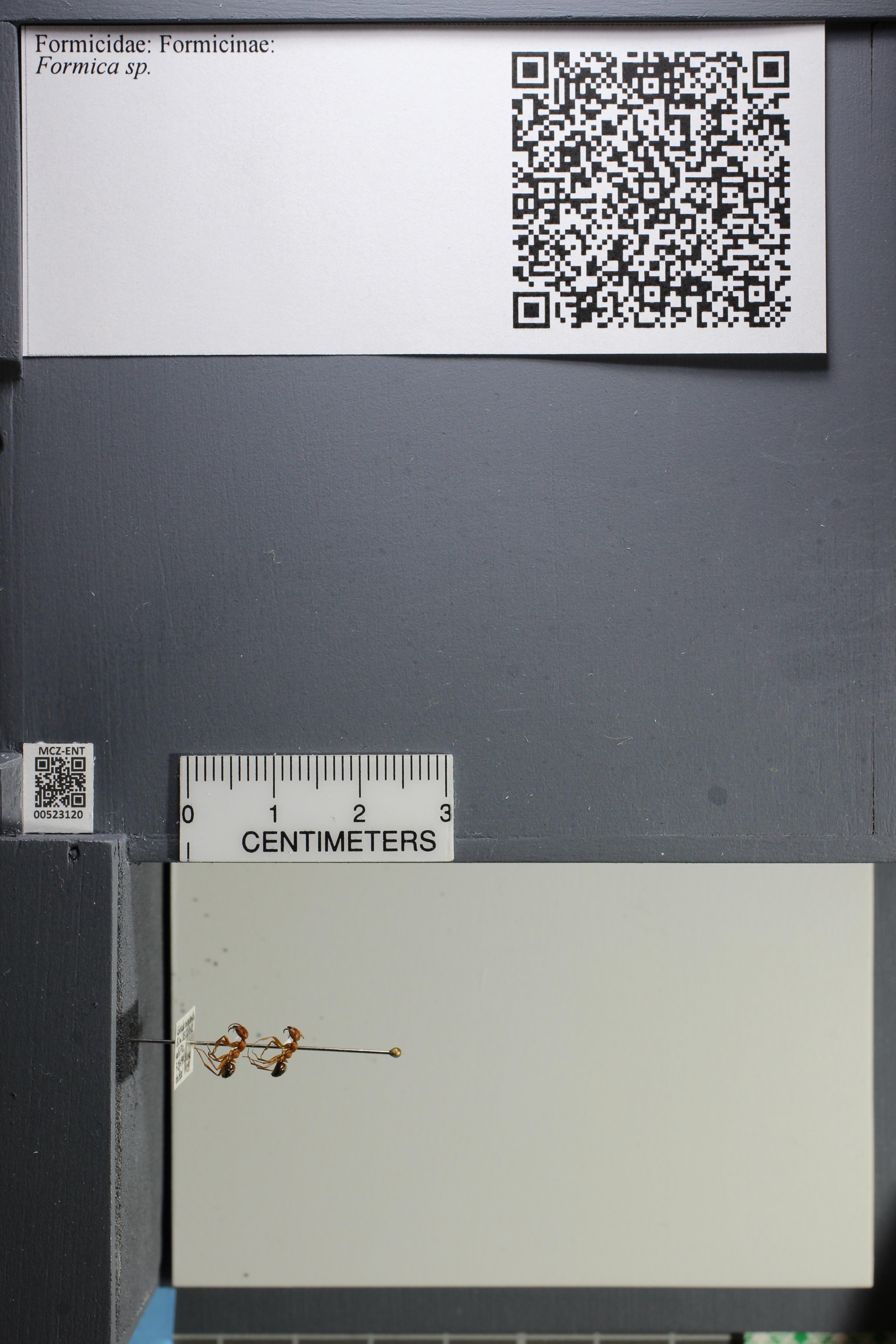 http://mczbase.mcz.harvard.edu/specimen_images/ent-formicidae/datashot/2014_02_25/IMG_300710.JPG