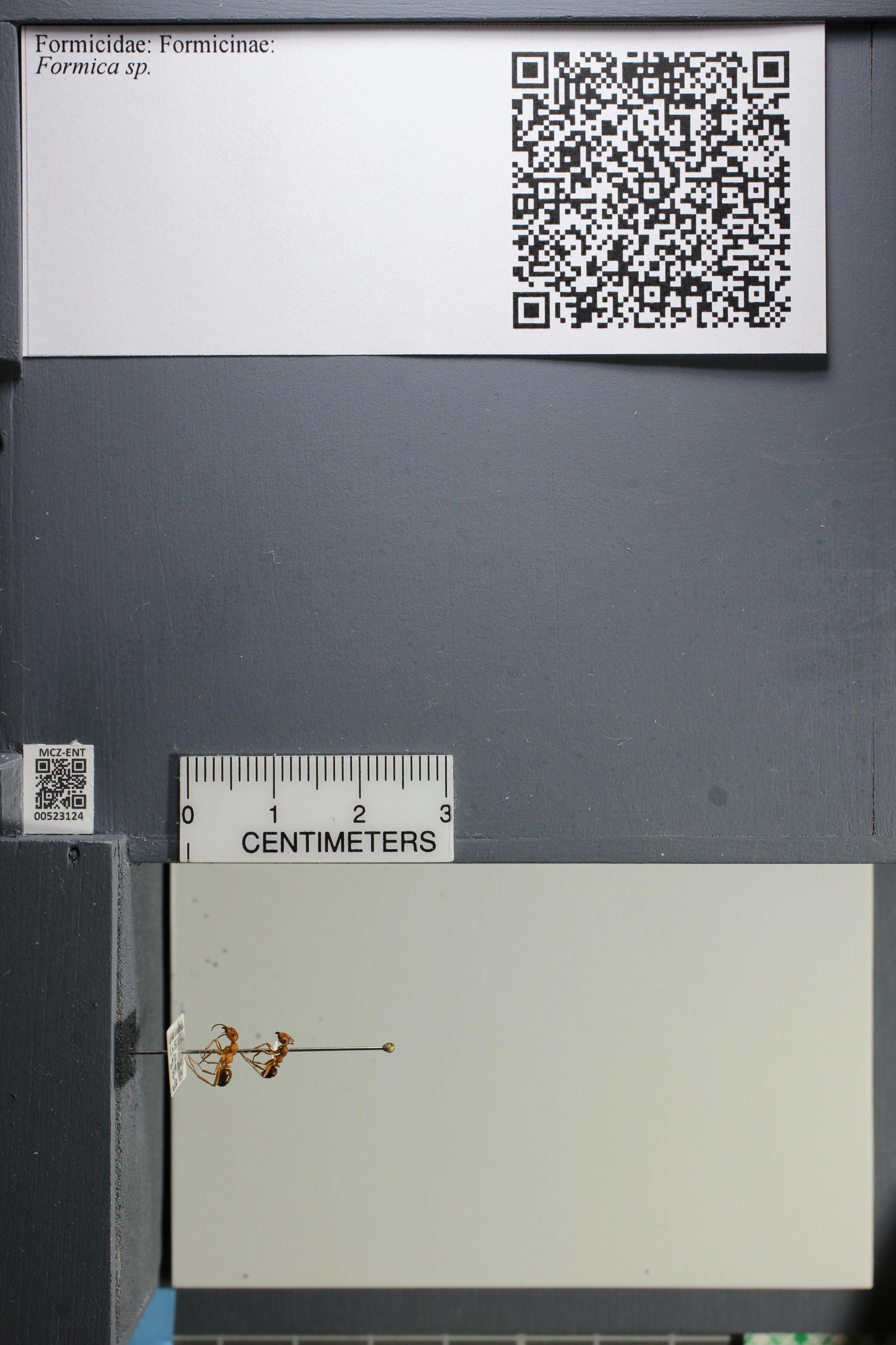 http://mczbase.mcz.harvard.edu/specimen_images/ent-formicidae/datashot/2014_02_25/IMG_300714.JPG