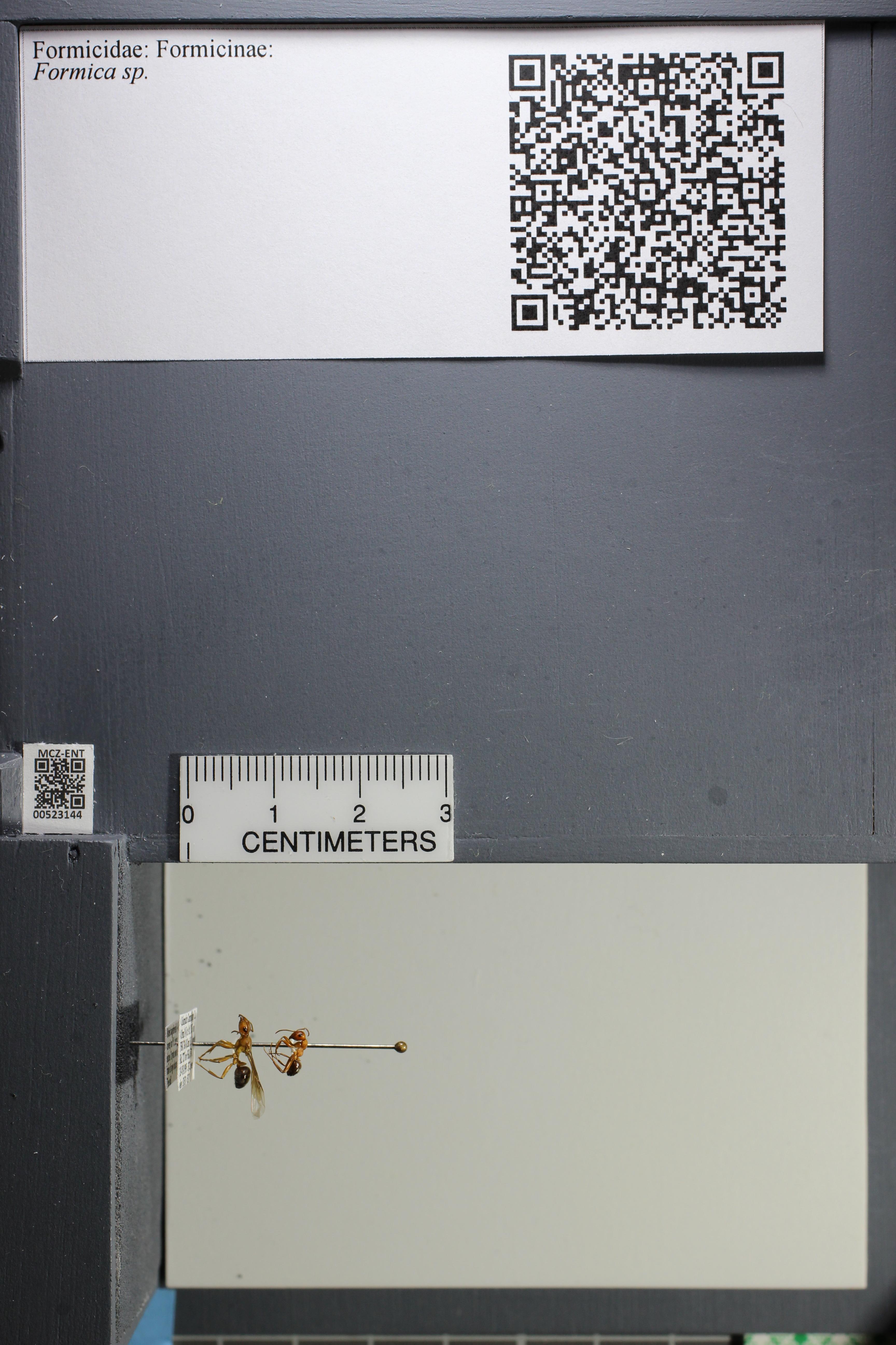 http://mczbase.mcz.harvard.edu/specimen_images/ent-formicidae/datashot/2014_02_25/IMG_300734.JPG