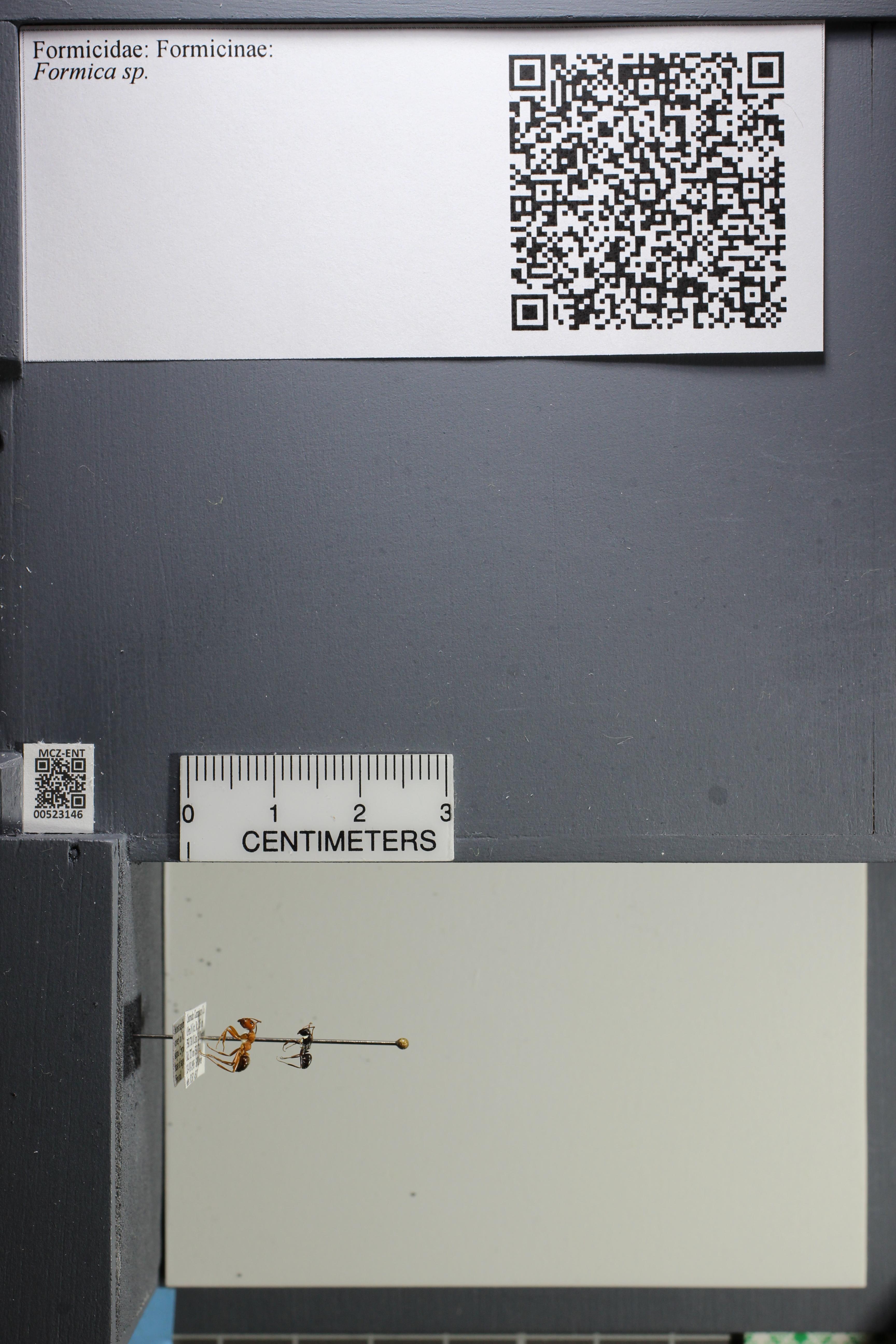 http://mczbase.mcz.harvard.edu/specimen_images/ent-formicidae/datashot/2014_02_25/IMG_300736.JPG