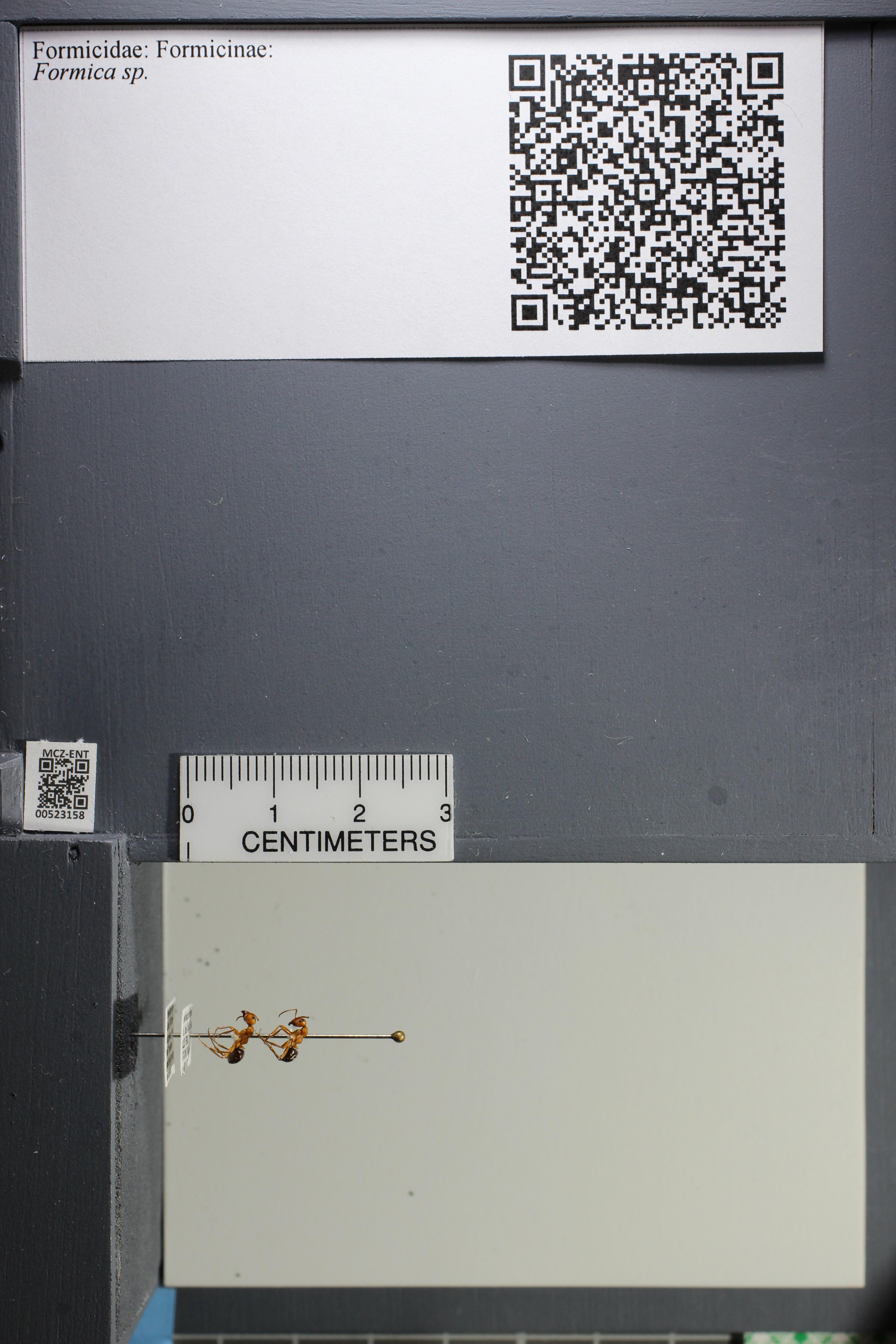 http://mczbase.mcz.harvard.edu/specimen_images/ent-formicidae/datashot/2014_02_25/IMG_300748.JPG