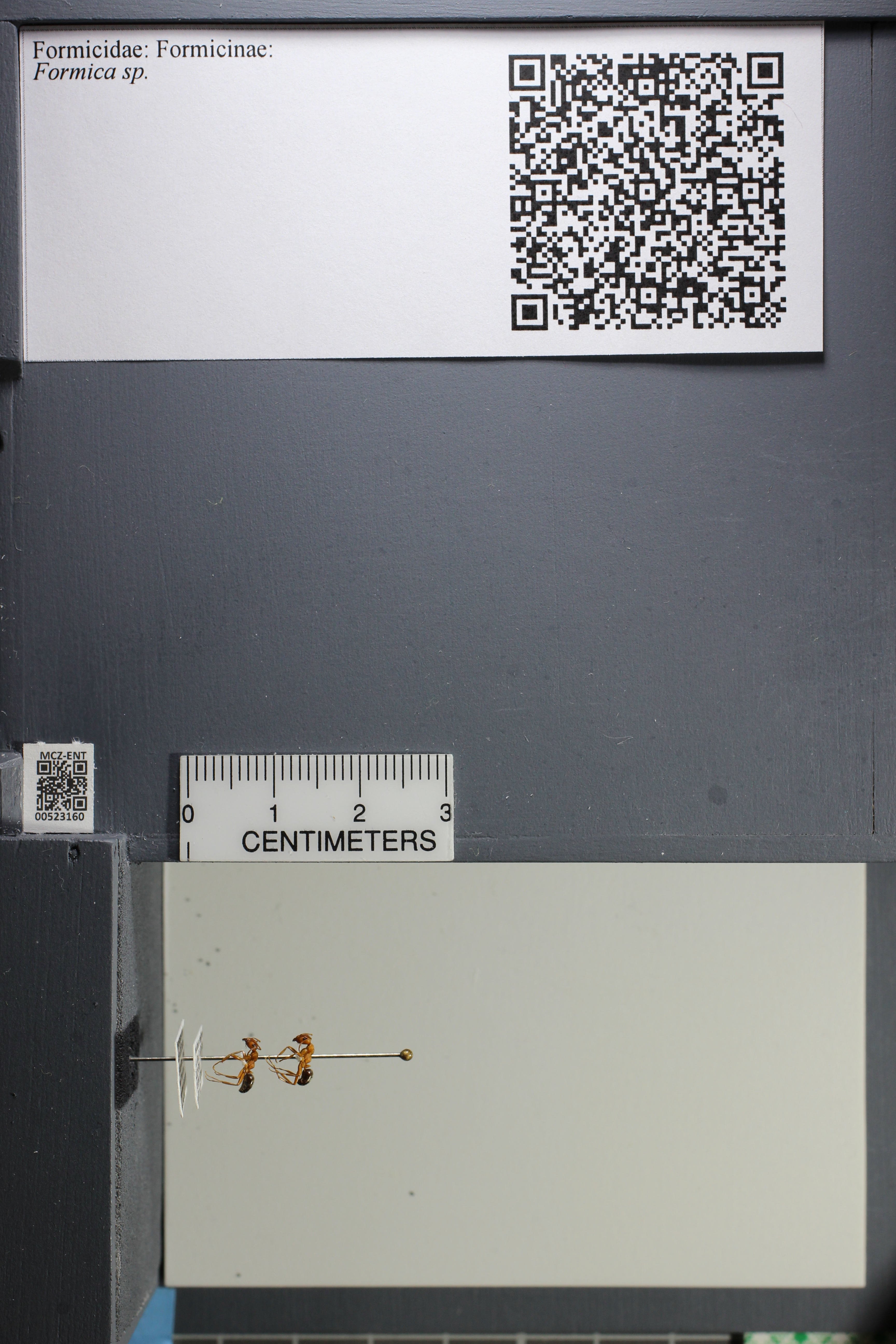 http://mczbase.mcz.harvard.edu/specimen_images/ent-formicidae/datashot/2014_02_25/IMG_300750.JPG