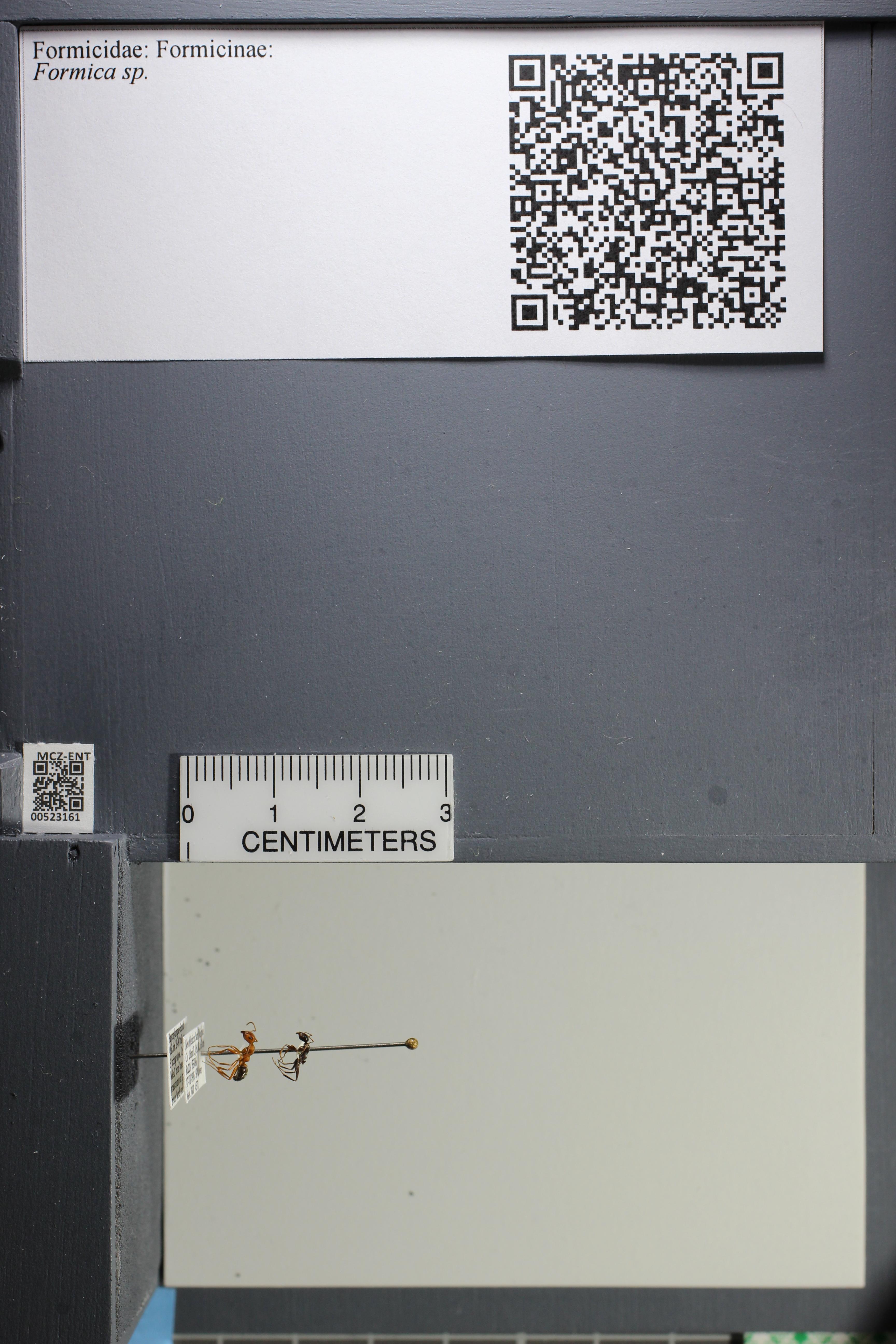 http://mczbase.mcz.harvard.edu/specimen_images/ent-formicidae/datashot/2014_02_25/IMG_300751.JPG