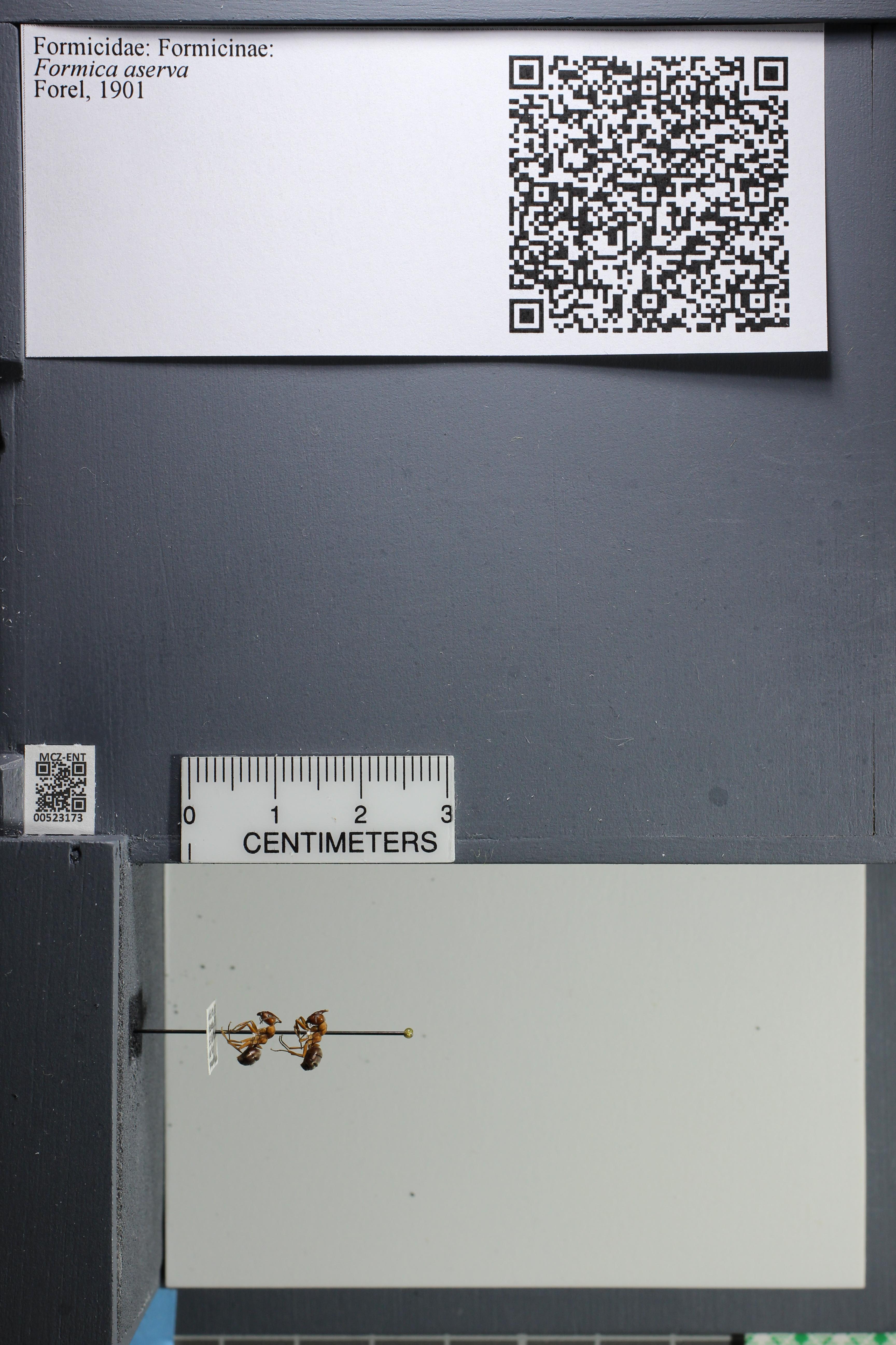 http://mczbase.mcz.harvard.edu/specimen_images/ent-formicidae/datashot/2014_02_26/IMG_300761.JPG