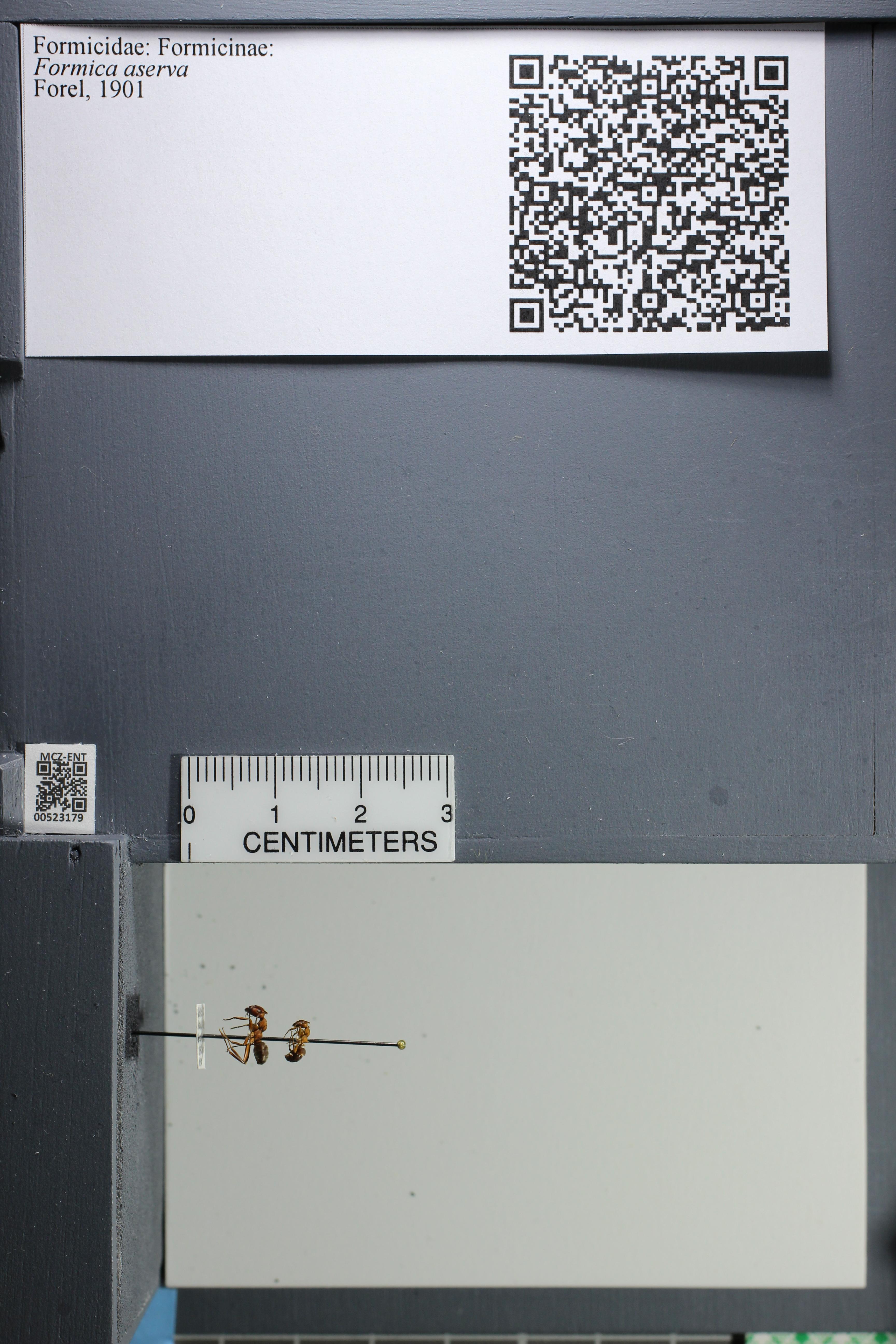 http://mczbase.mcz.harvard.edu/specimen_images/ent-formicidae/datashot/2014_02_26/IMG_300770.JPG