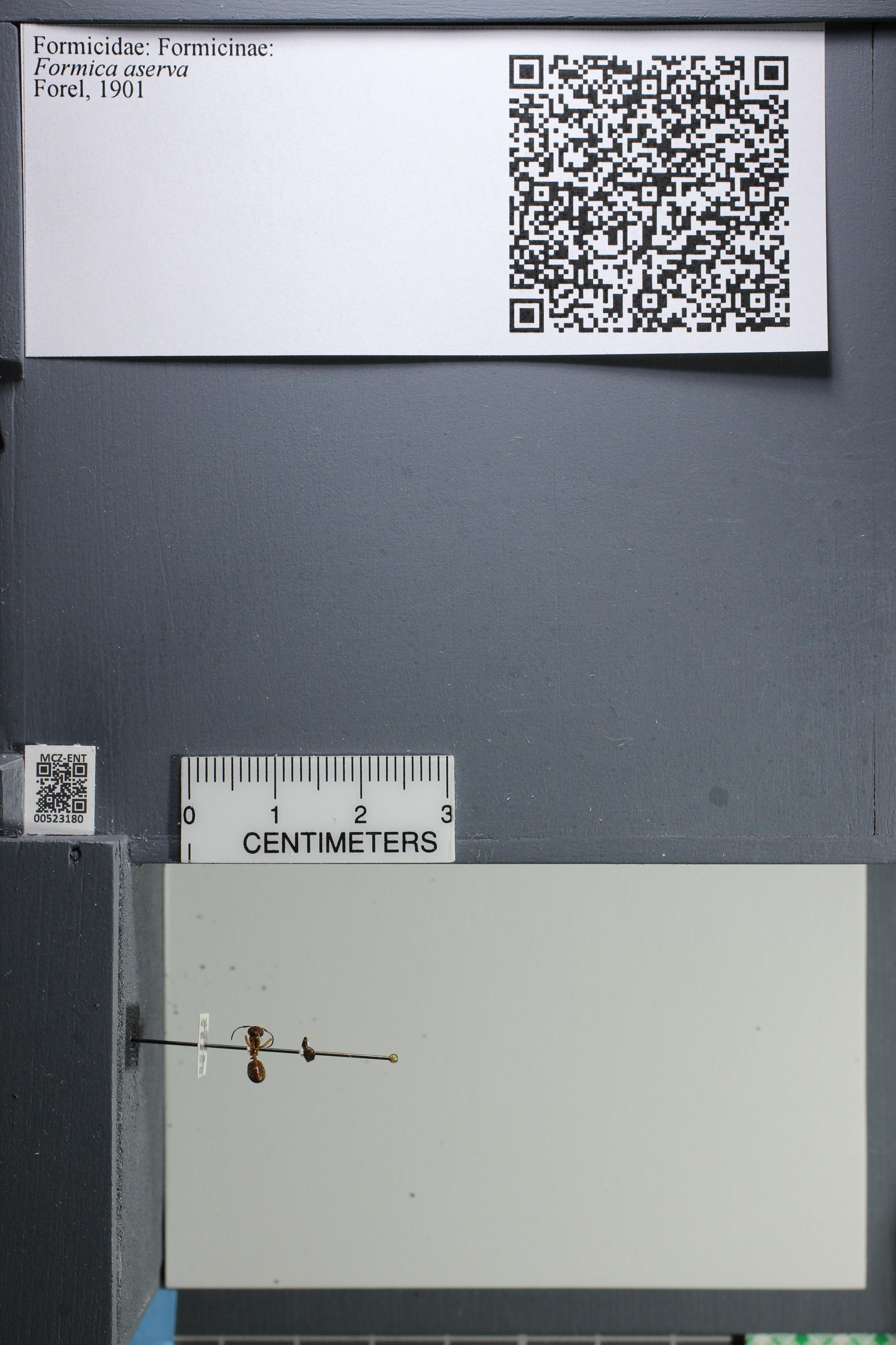 http://mczbase.mcz.harvard.edu/specimen_images/ent-formicidae/datashot/2014_02_26/IMG_300771.JPG