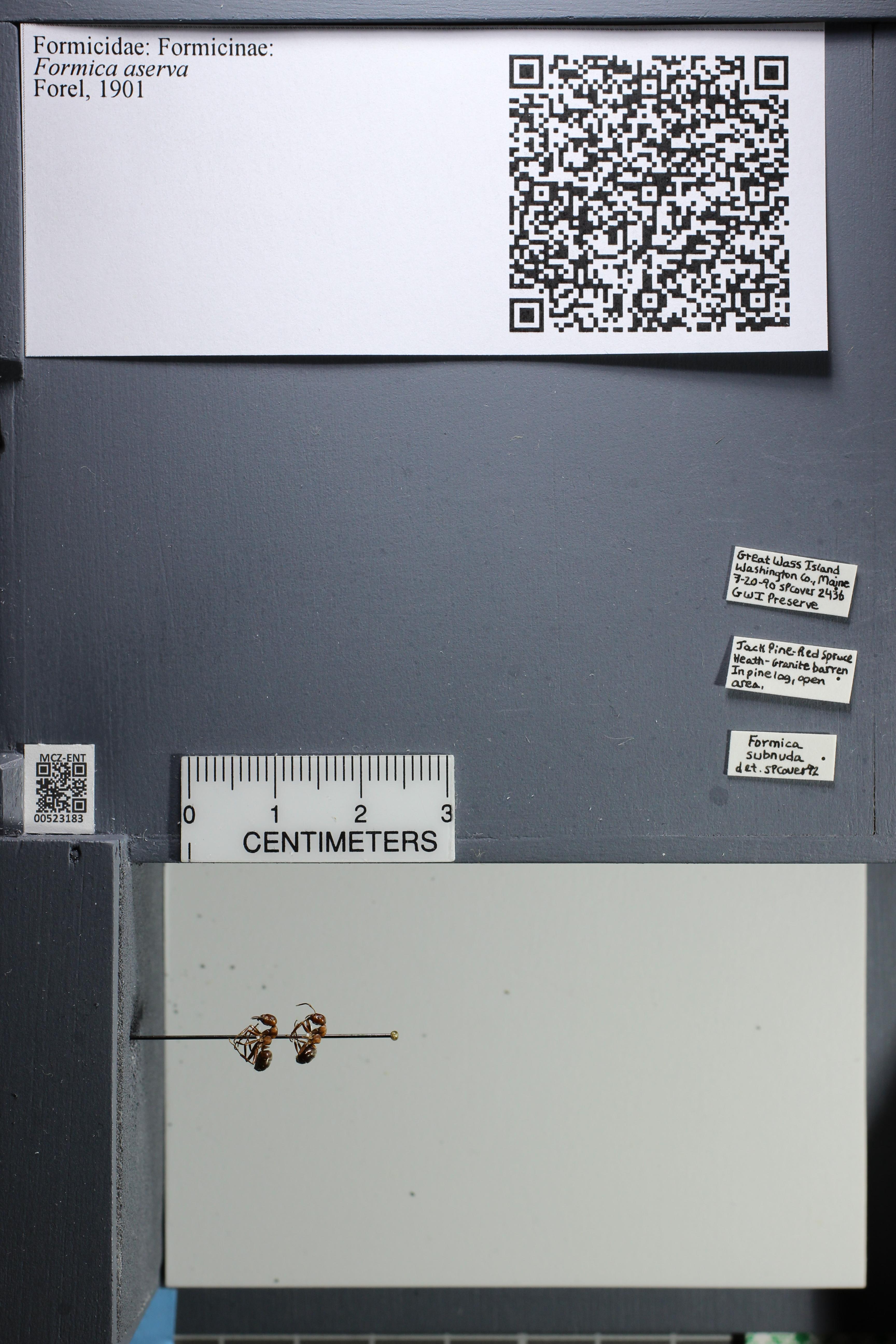 http://mczbase.mcz.harvard.edu/specimen_images/ent-formicidae/datashot/2014_02_26/IMG_300774.JPG
