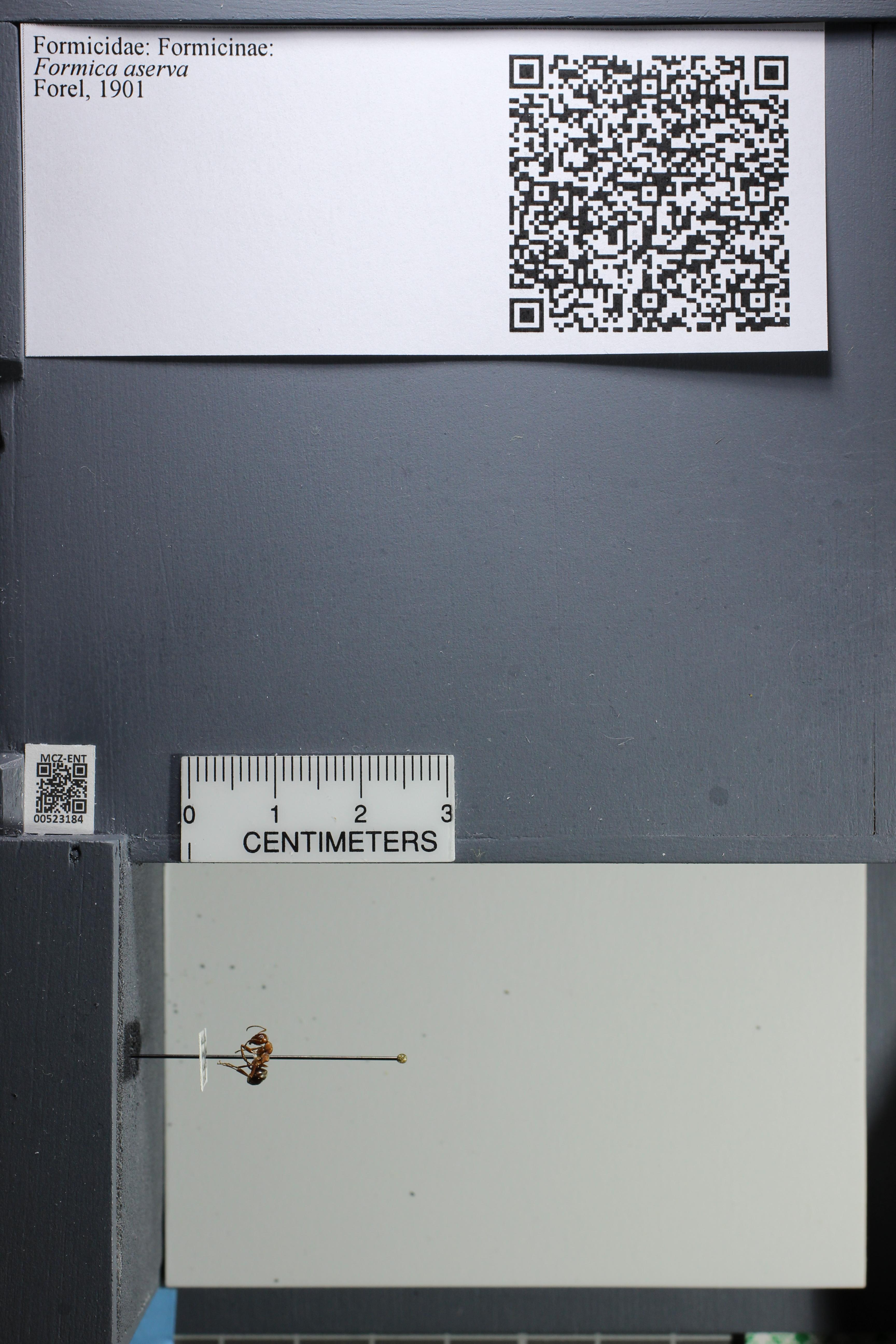 http://mczbase.mcz.harvard.edu/specimen_images/ent-formicidae/datashot/2014_02_26/IMG_300775.JPG