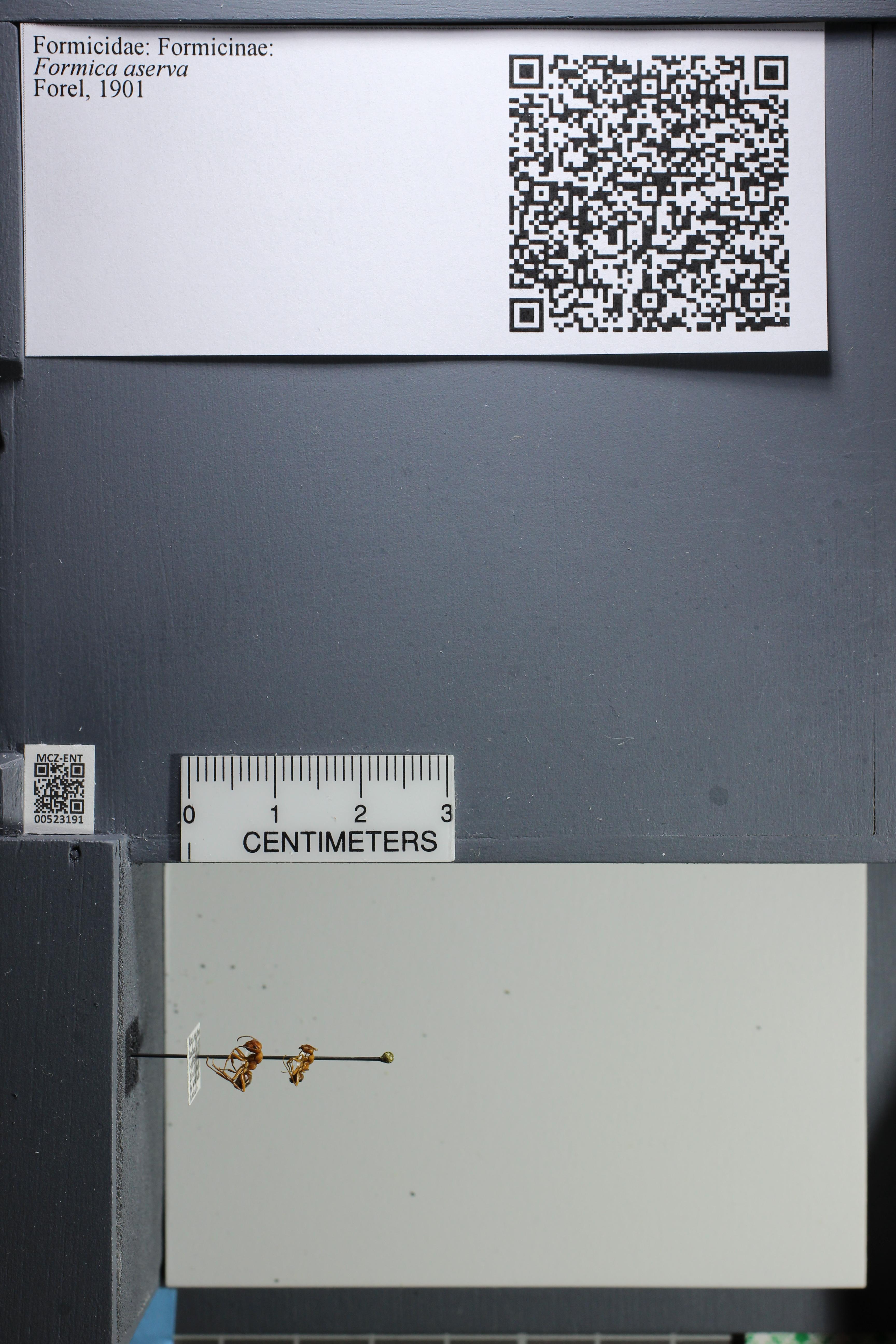 http://mczbase.mcz.harvard.edu/specimen_images/ent-formicidae/datashot/2014_02_26/IMG_300782.JPG