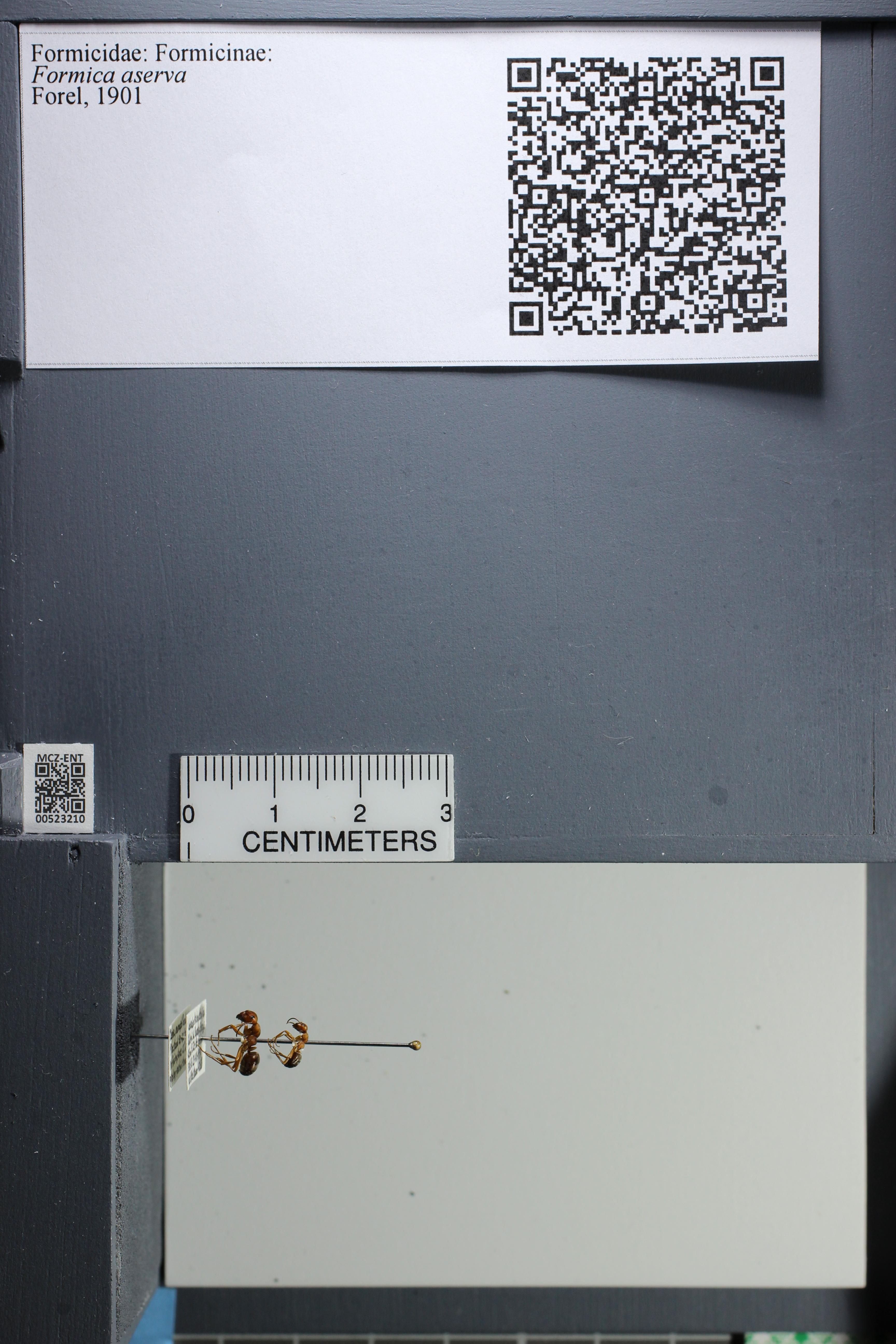 http://mczbase.mcz.harvard.edu/specimen_images/ent-formicidae/datashot/2014_02_26/IMG_300801.JPG