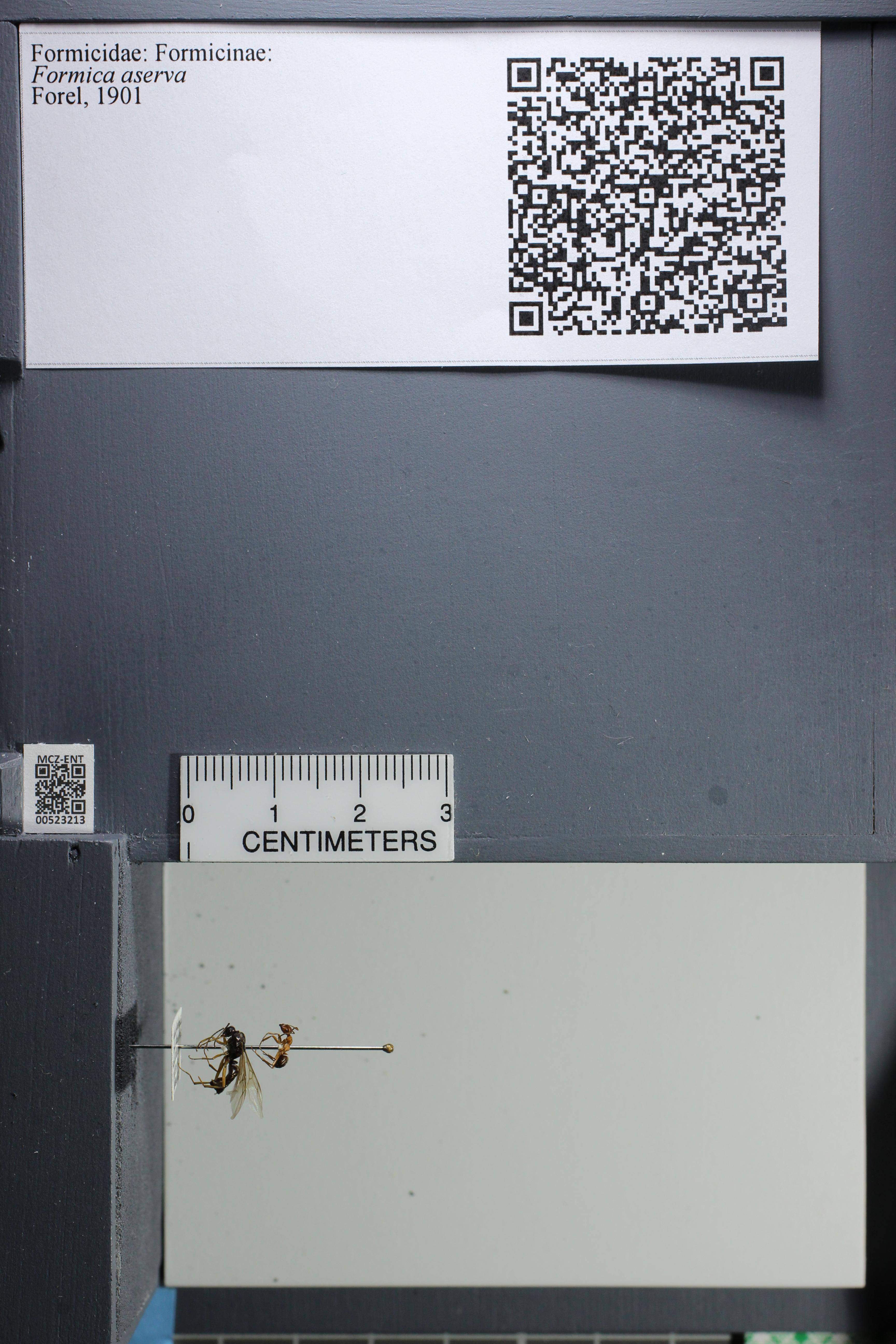 http://mczbase.mcz.harvard.edu/specimen_images/ent-formicidae/datashot/2014_02_26/IMG_300804.JPG