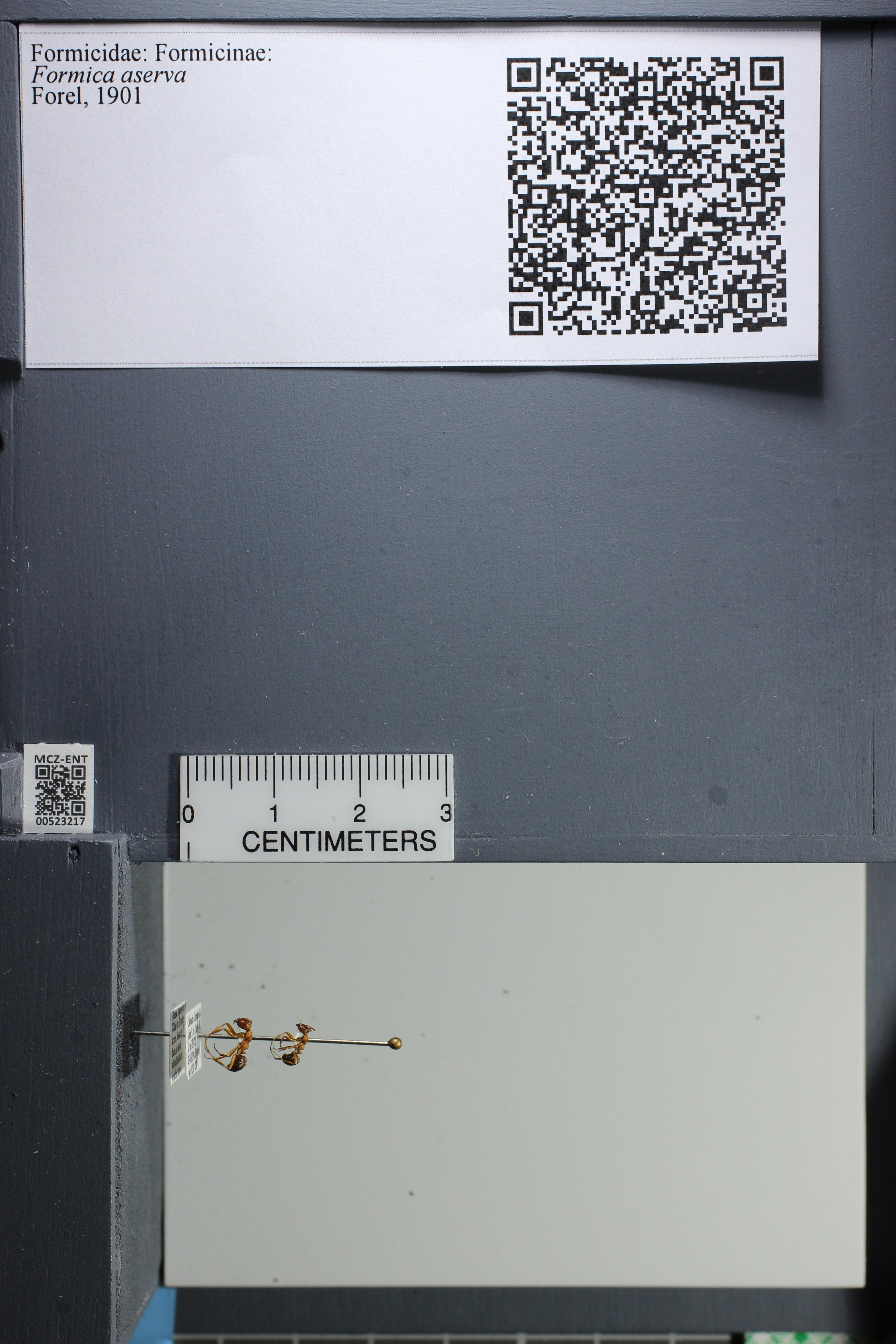 http://mczbase.mcz.harvard.edu/specimen_images/ent-formicidae/datashot/2014_02_26/IMG_300808.JPG