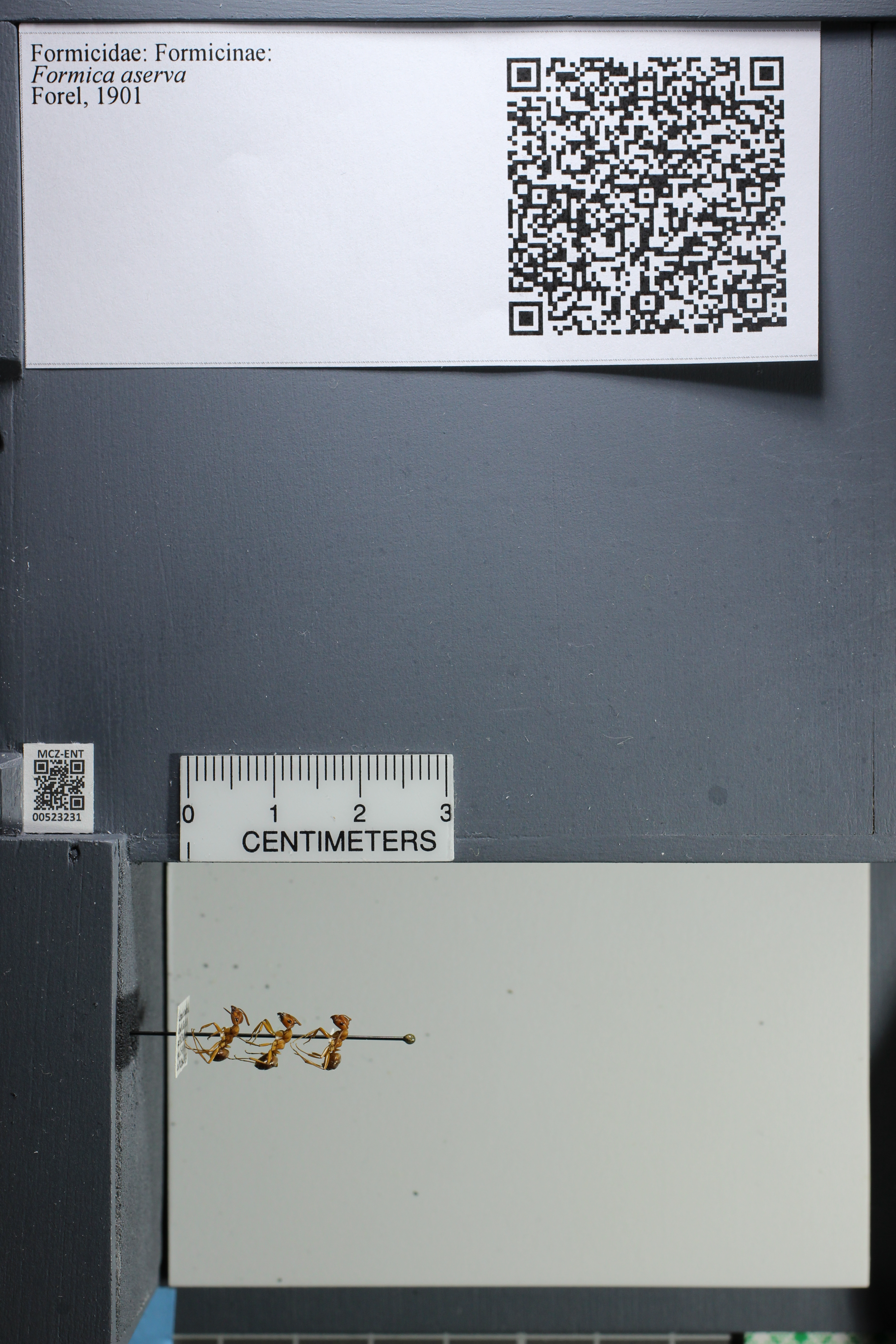 http://mczbase.mcz.harvard.edu/specimen_images/ent-formicidae/datashot/2014_02_26/IMG_300822.JPG