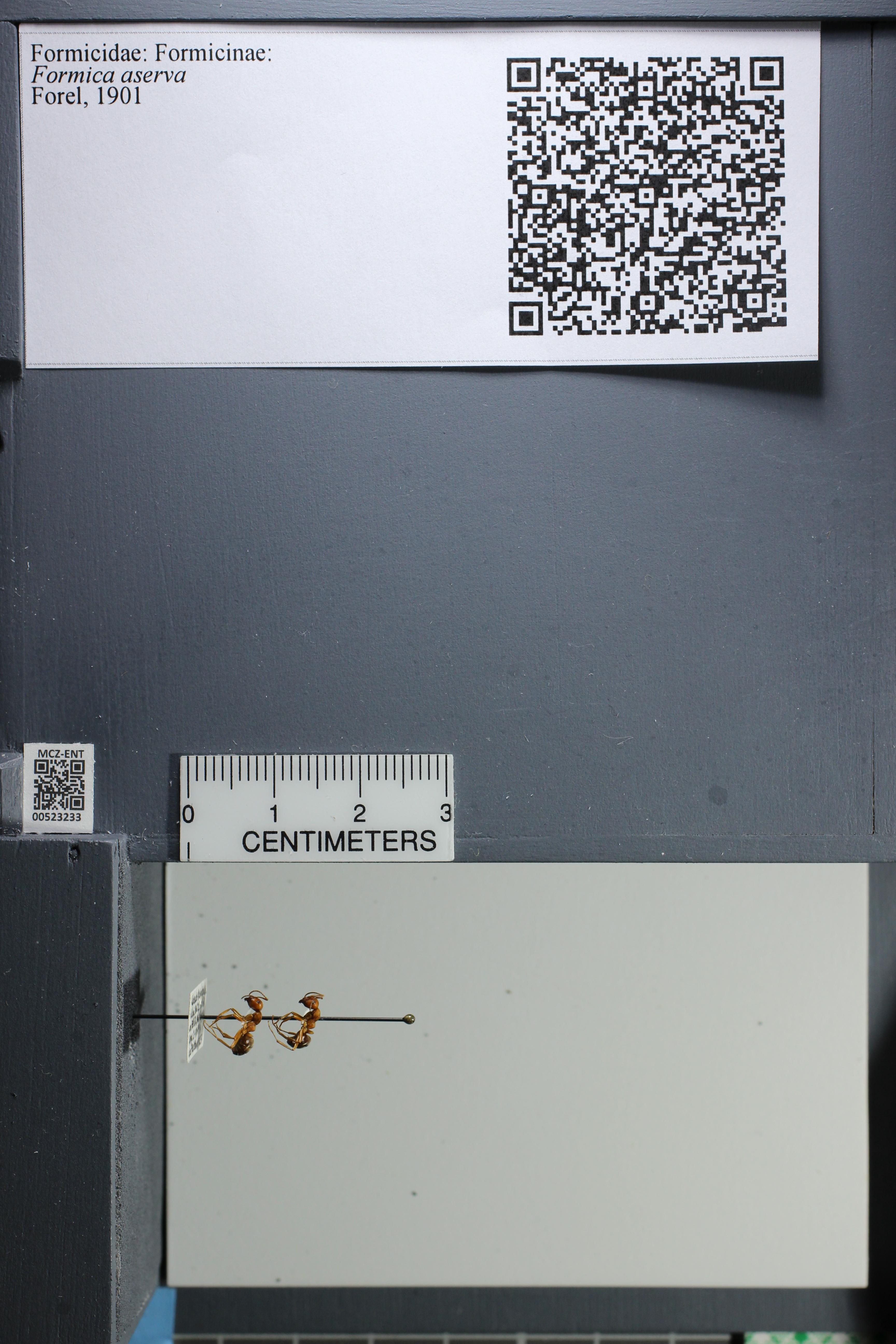 http://mczbase.mcz.harvard.edu/specimen_images/ent-formicidae/datashot/2014_02_26/IMG_300824.JPG
