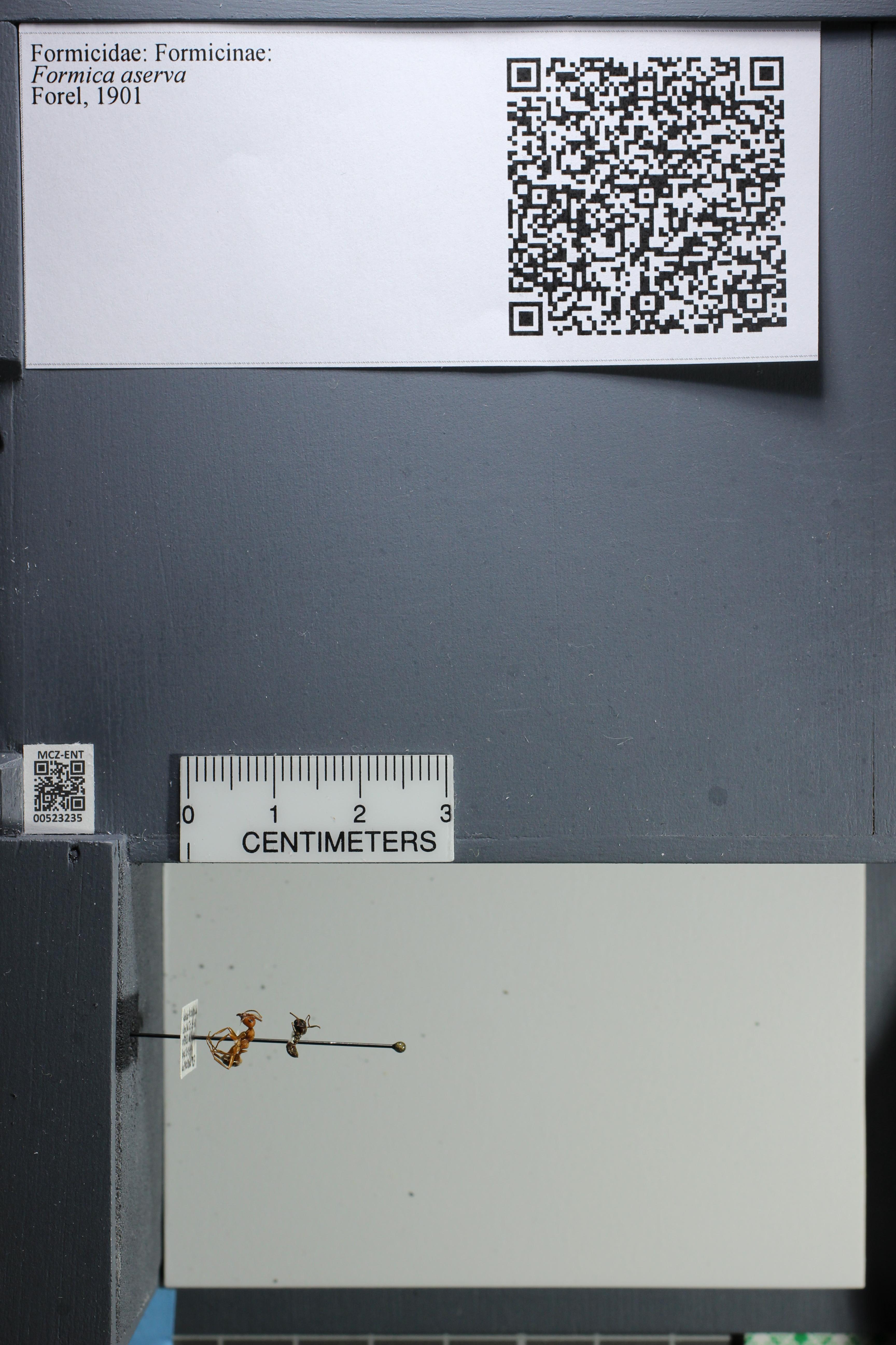 http://mczbase.mcz.harvard.edu/specimen_images/ent-formicidae/datashot/2014_02_26/IMG_300826.JPG
