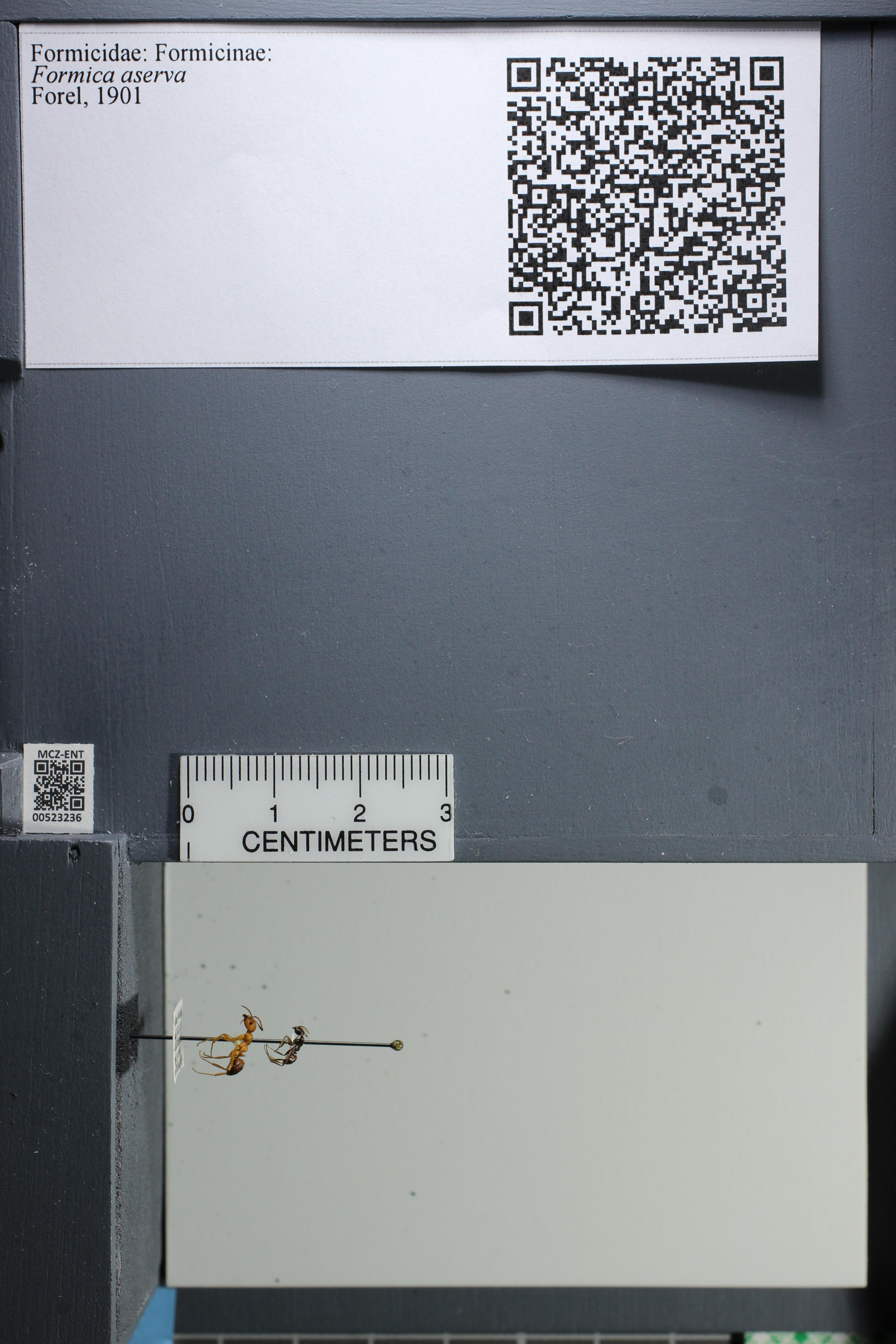 http://mczbase.mcz.harvard.edu/specimen_images/ent-formicidae/datashot/2014_02_26/IMG_300827.JPG