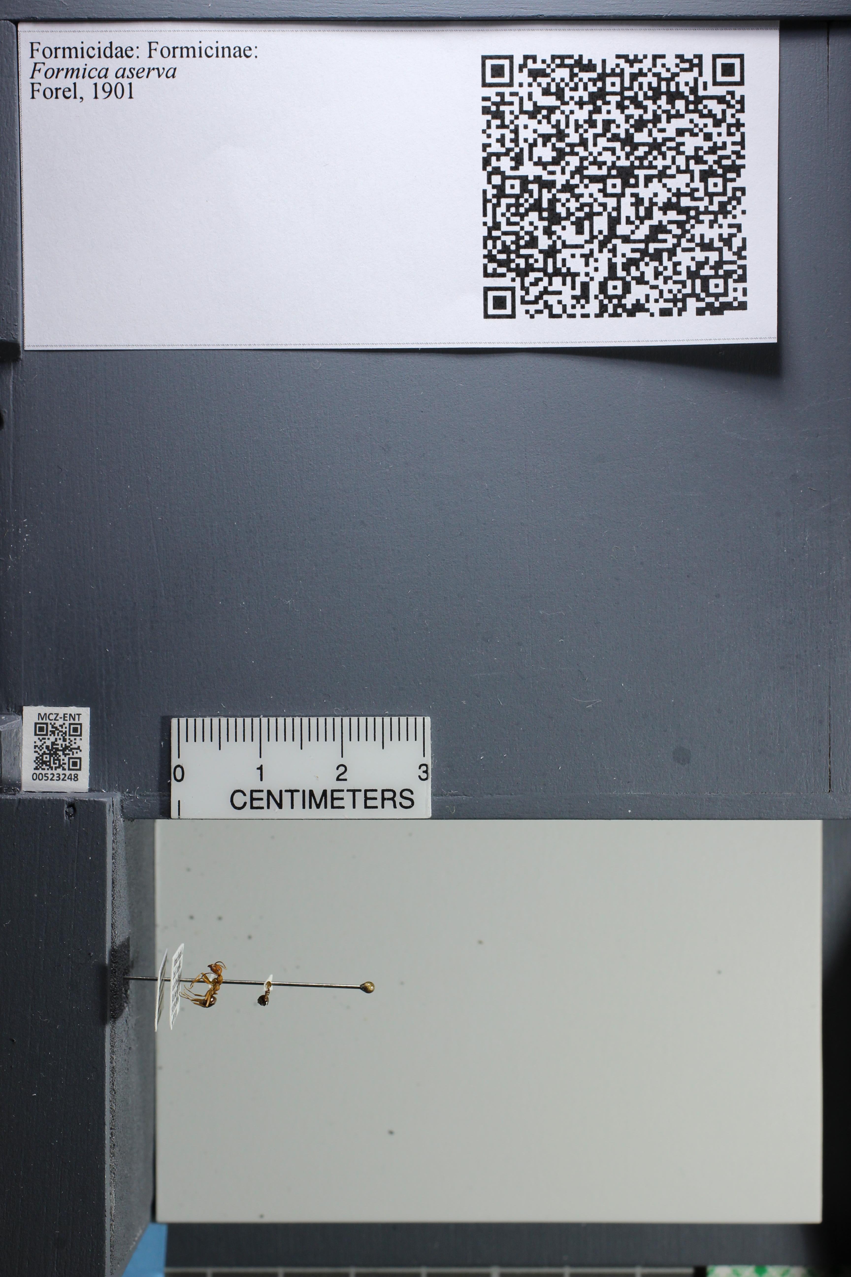 http://mczbase.mcz.harvard.edu/specimen_images/ent-formicidae/datashot/2014_02_26/IMG_300839.JPG