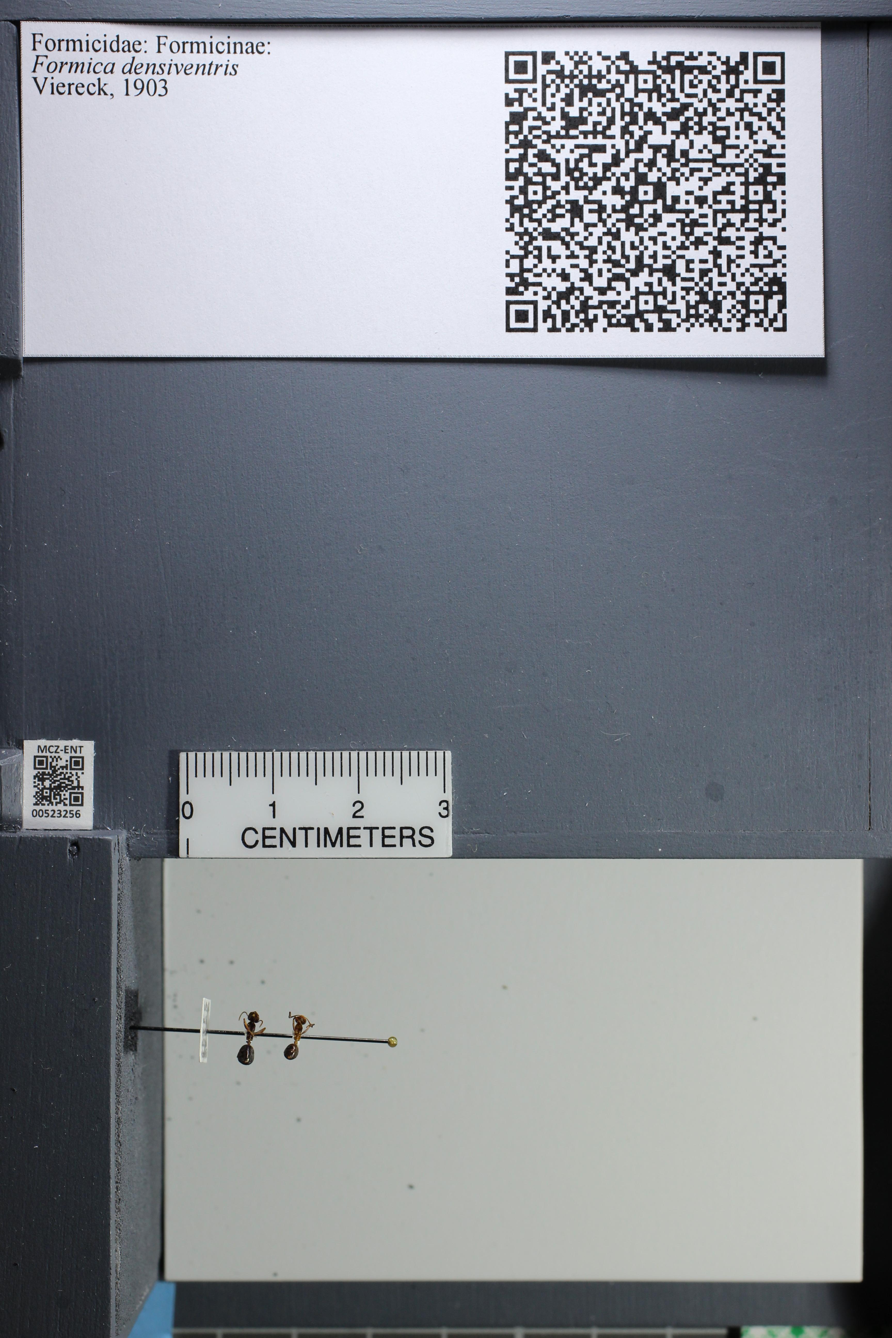http://mczbase.mcz.harvard.edu/specimen_images/ent-formicidae/datashot/2014_02_26/IMG_300847.JPG