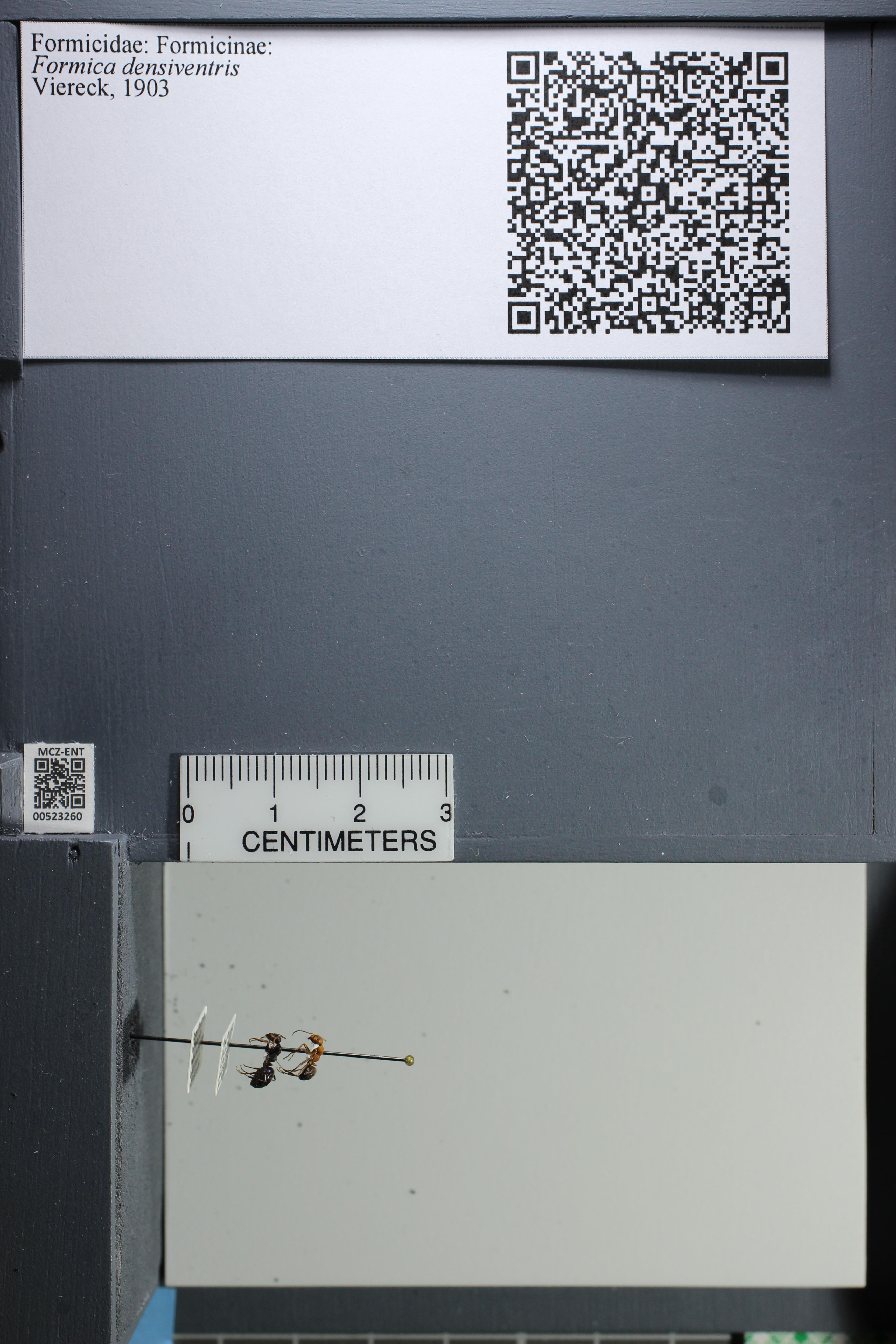 http://mczbase.mcz.harvard.edu/specimen_images/ent-formicidae/datashot/2014_02_26/IMG_300851.JPG