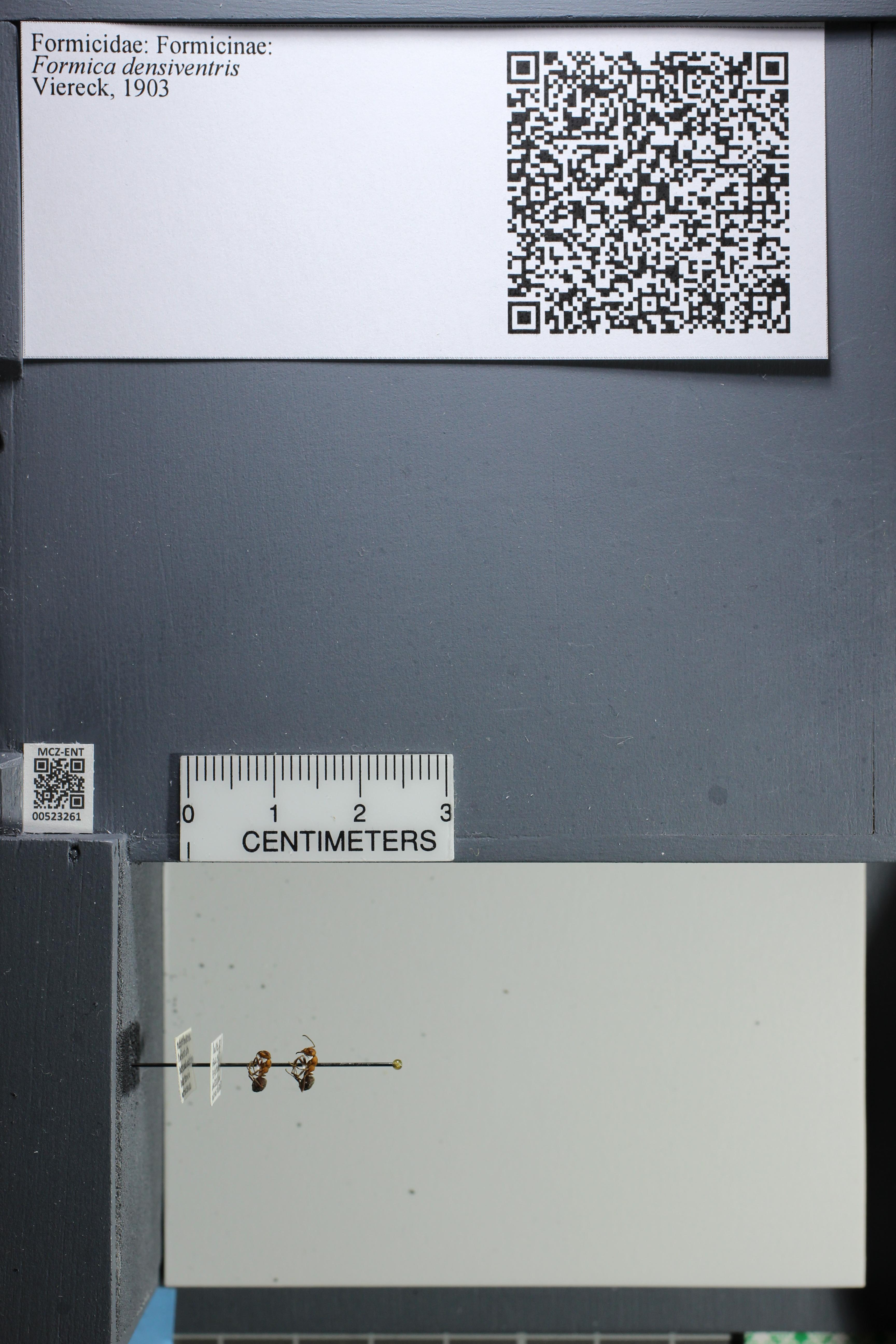 http://mczbase.mcz.harvard.edu/specimen_images/ent-formicidae/datashot/2014_02_26/IMG_300852.JPG