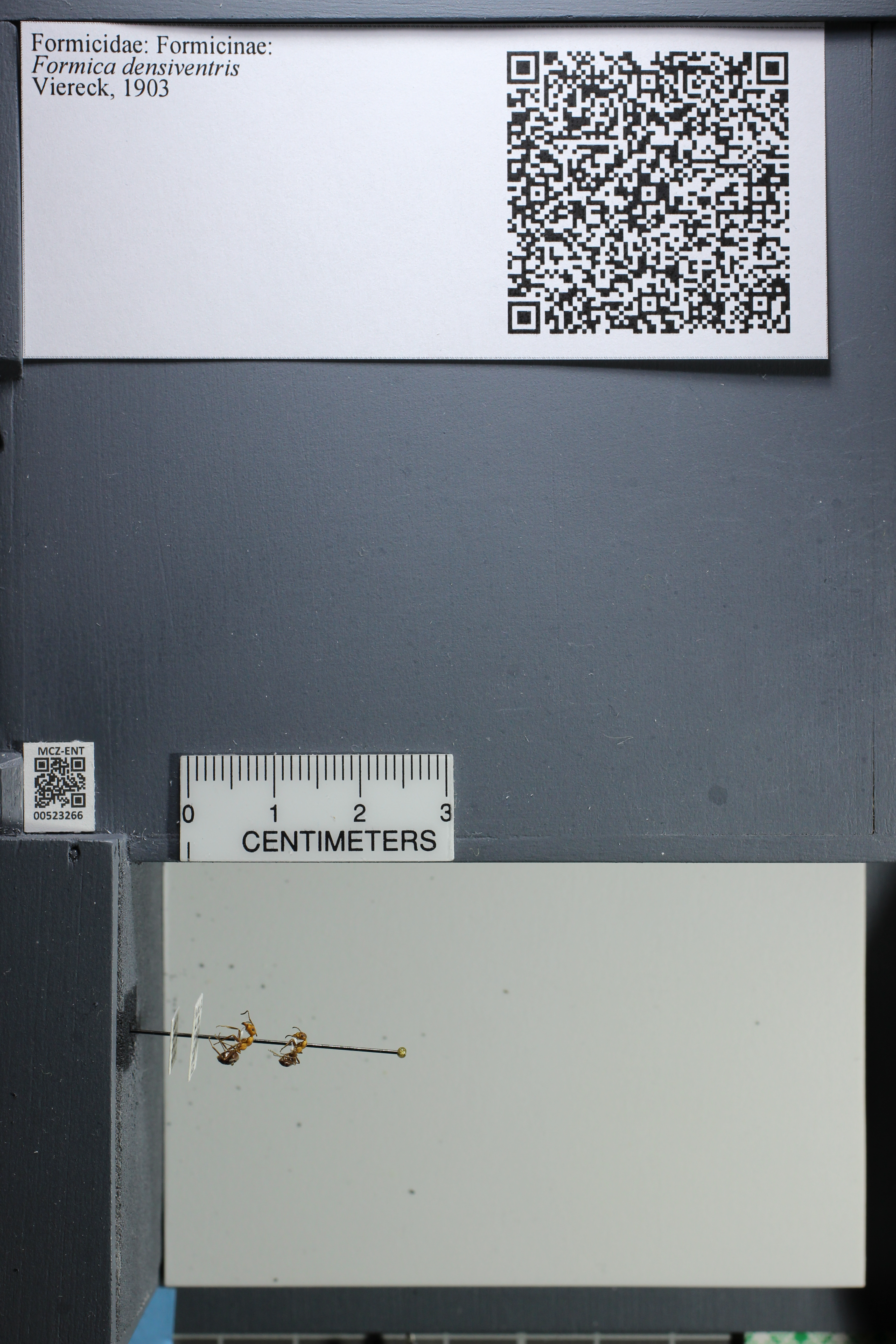http://mczbase.mcz.harvard.edu/specimen_images/ent-formicidae/datashot/2014_02_26/IMG_300857.JPG