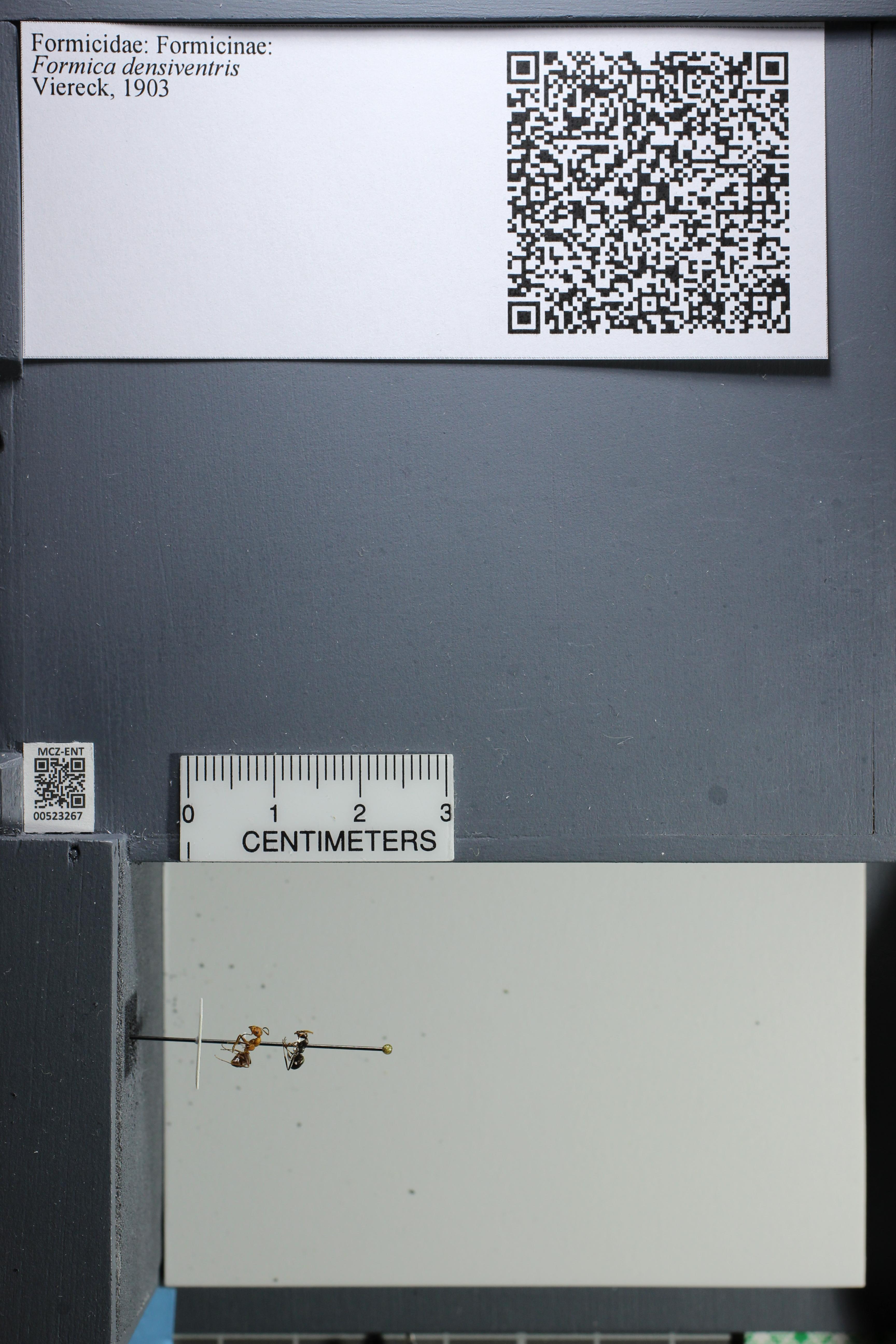 http://mczbase.mcz.harvard.edu/specimen_images/ent-formicidae/datashot/2014_02_26/IMG_300858.JPG