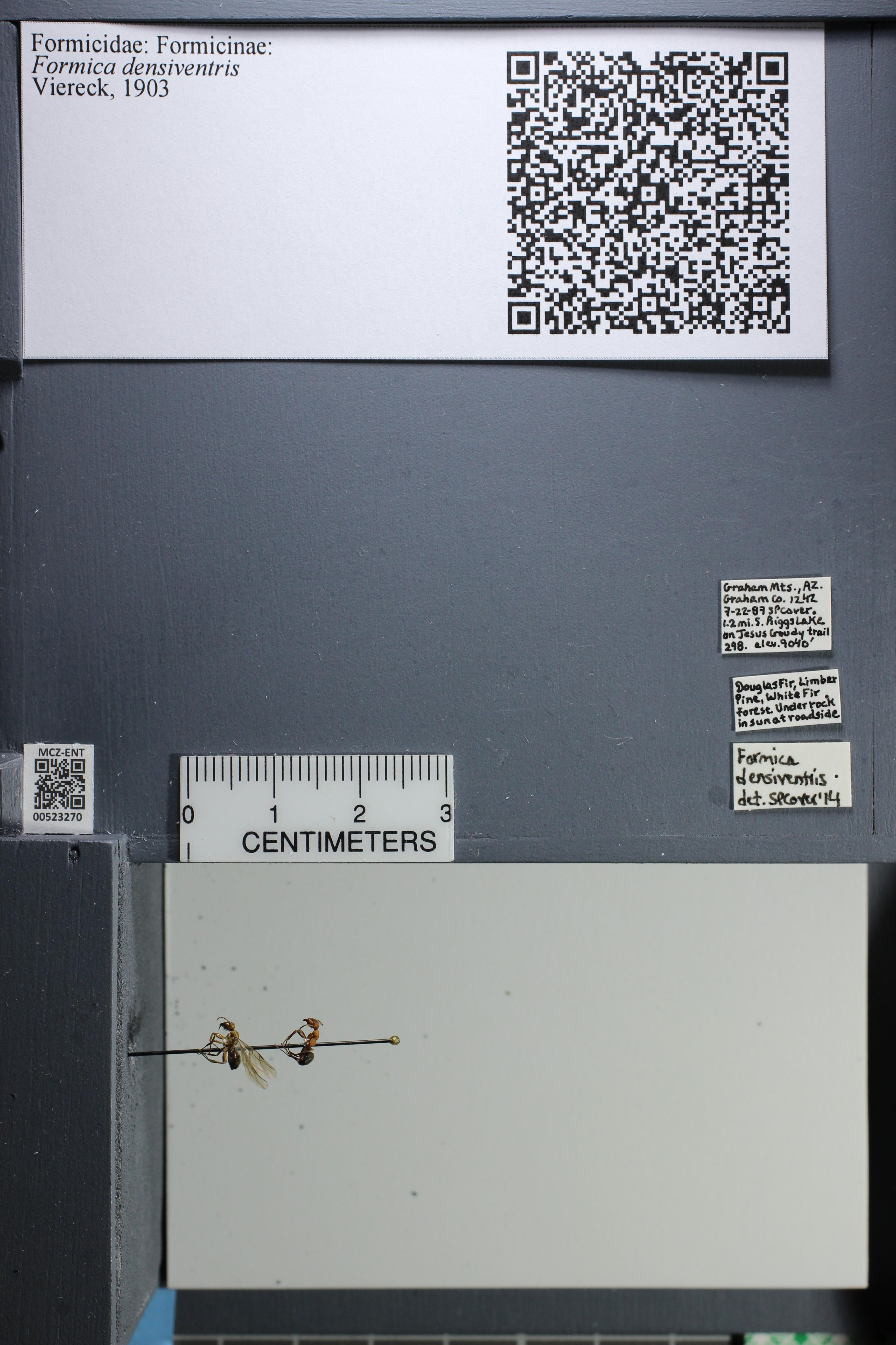 http://mczbase.mcz.harvard.edu/specimen_images/ent-formicidae/datashot/2014_02_26/IMG_300861.JPG
