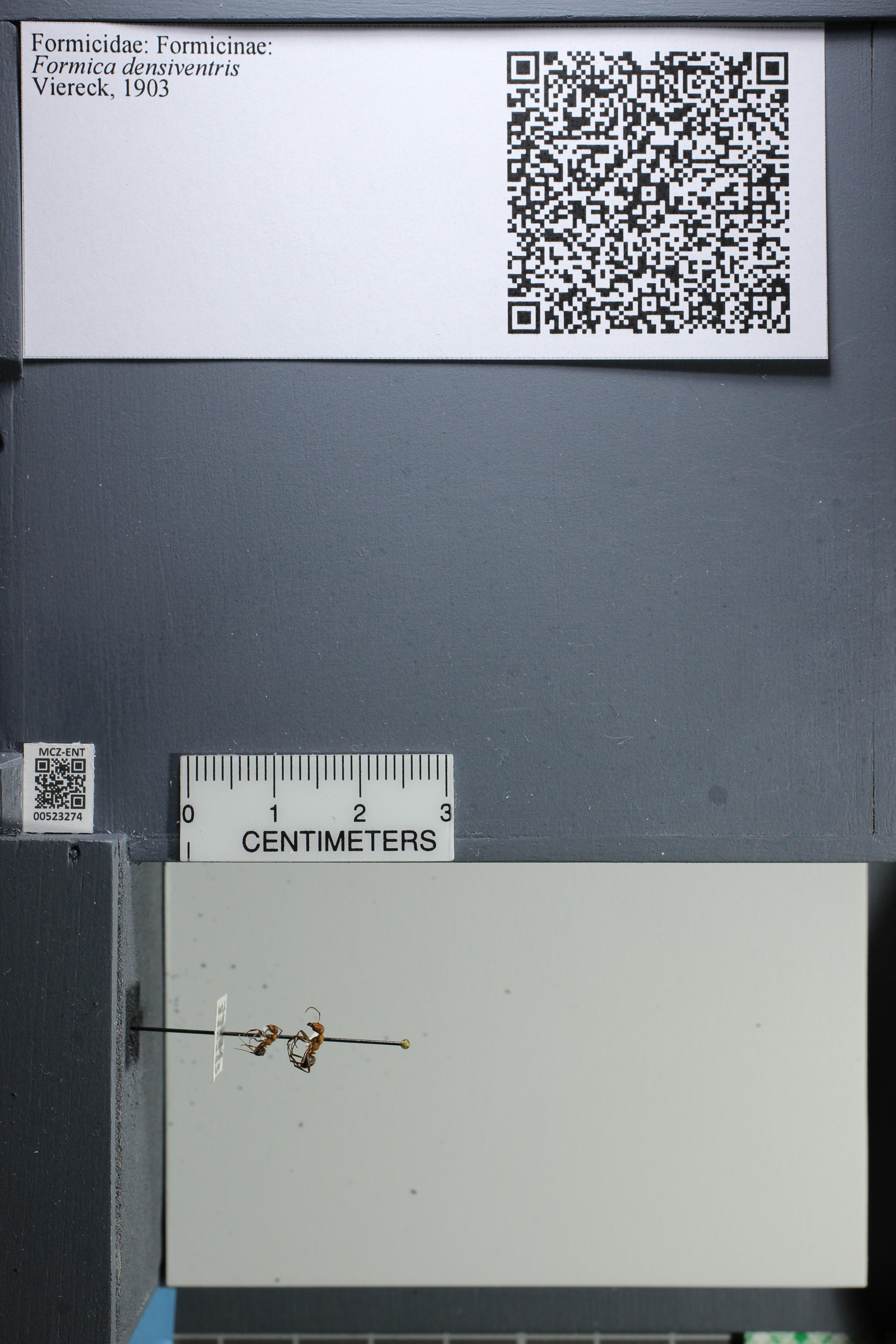 http://mczbase.mcz.harvard.edu/specimen_images/ent-formicidae/datashot/2014_02_26/IMG_300865.JPG