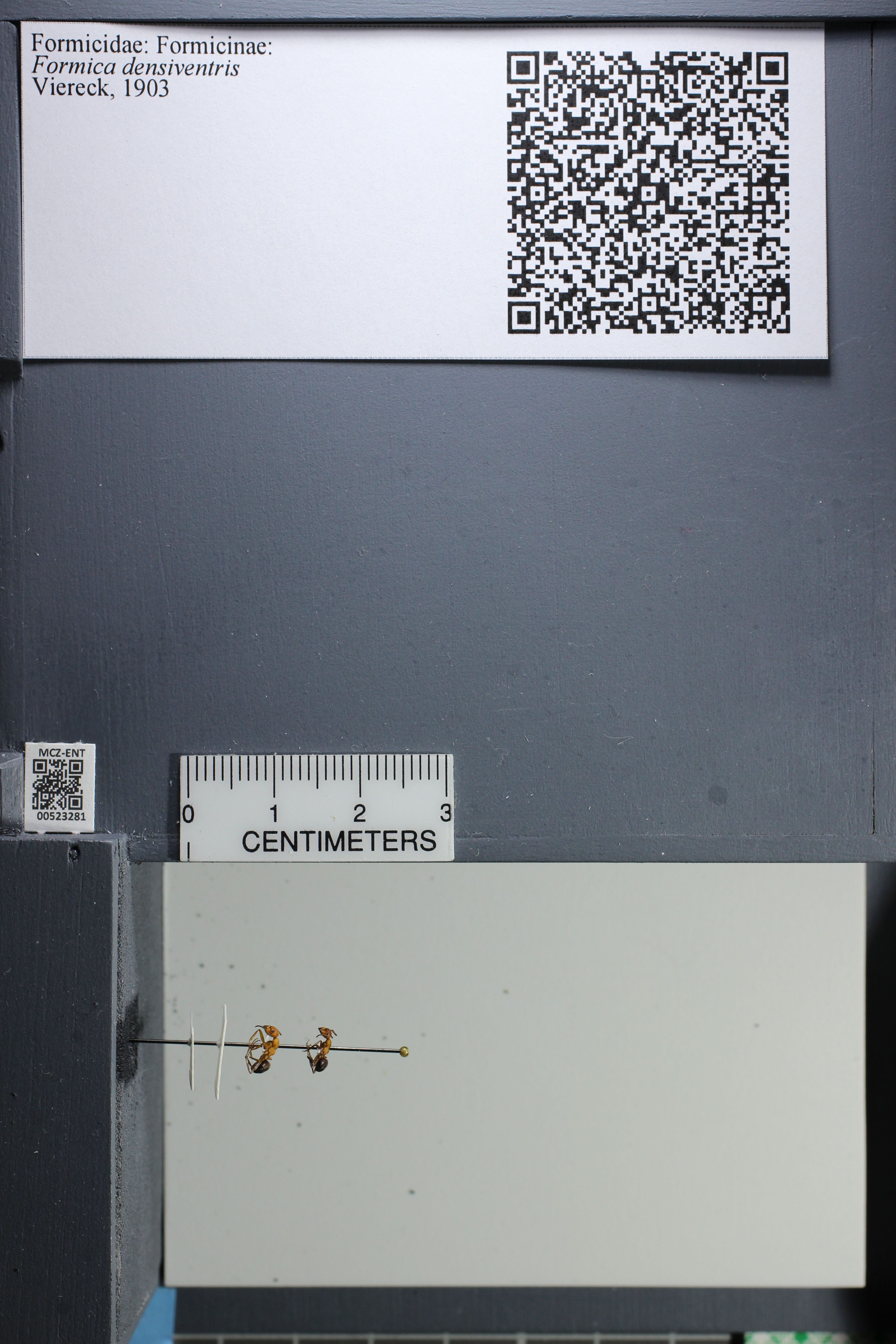 http://mczbase.mcz.harvard.edu/specimen_images/ent-formicidae/datashot/2014_02_26/IMG_300872.JPG