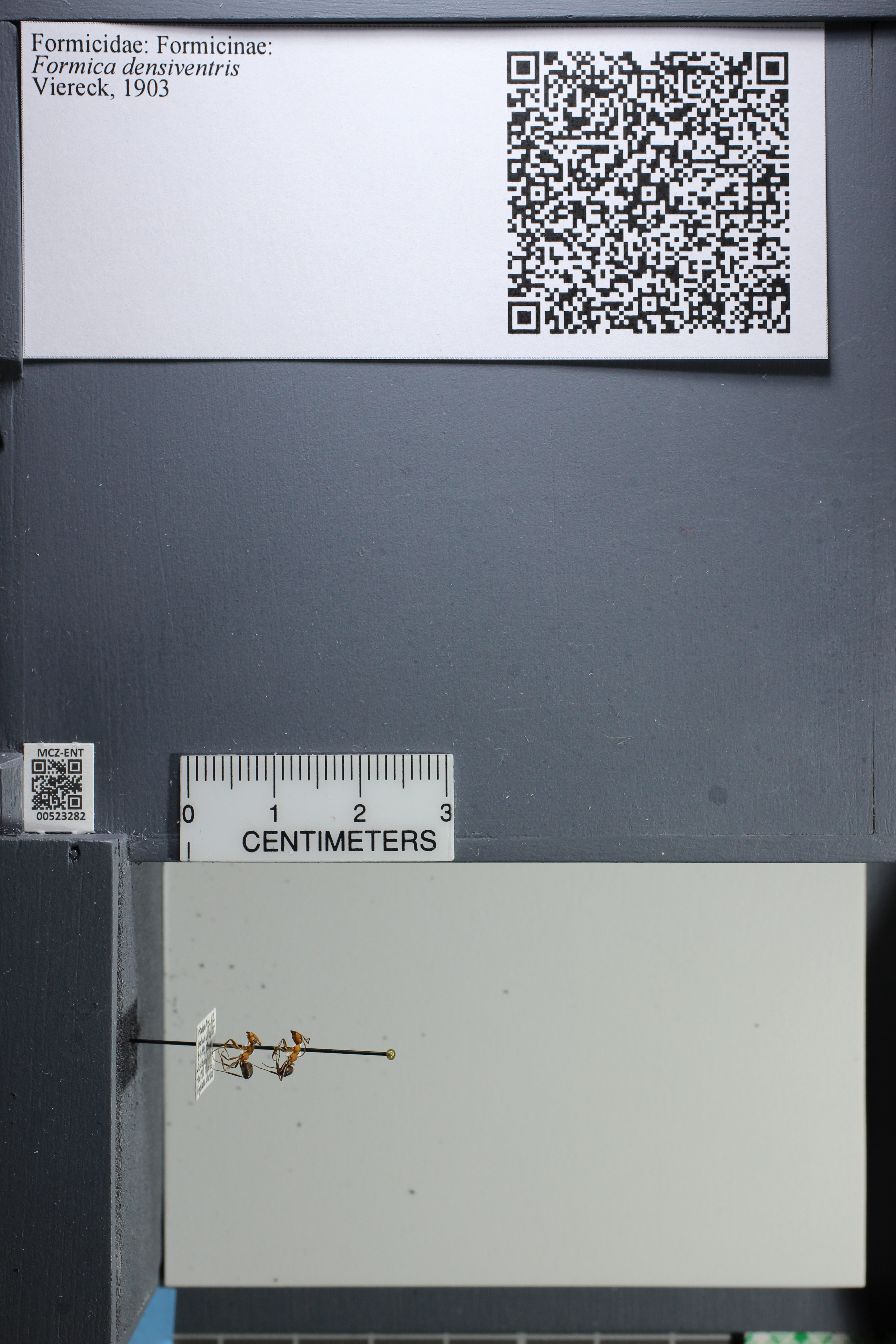 http://mczbase.mcz.harvard.edu/specimen_images/ent-formicidae/datashot/2014_02_26/IMG_300873.JPG
